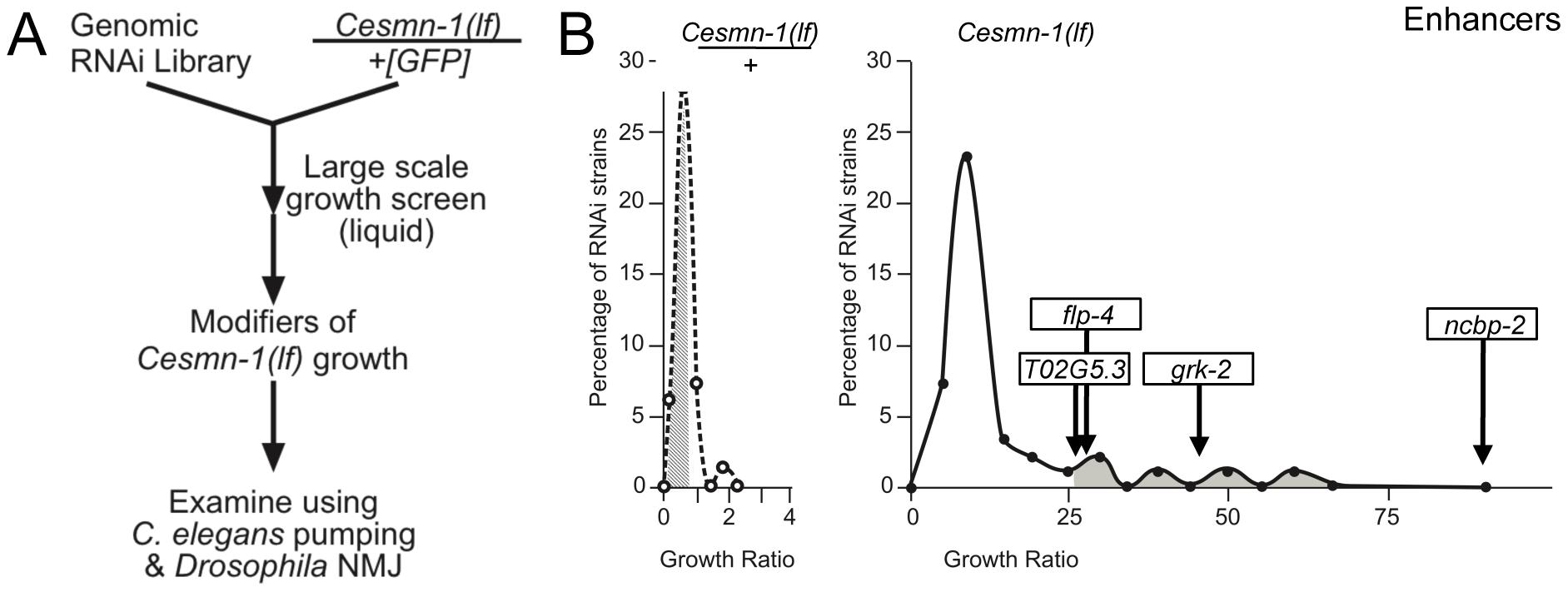 Genome-wide RNAi screen for <i>Cesmn-1(lf)</i> modifier genes.