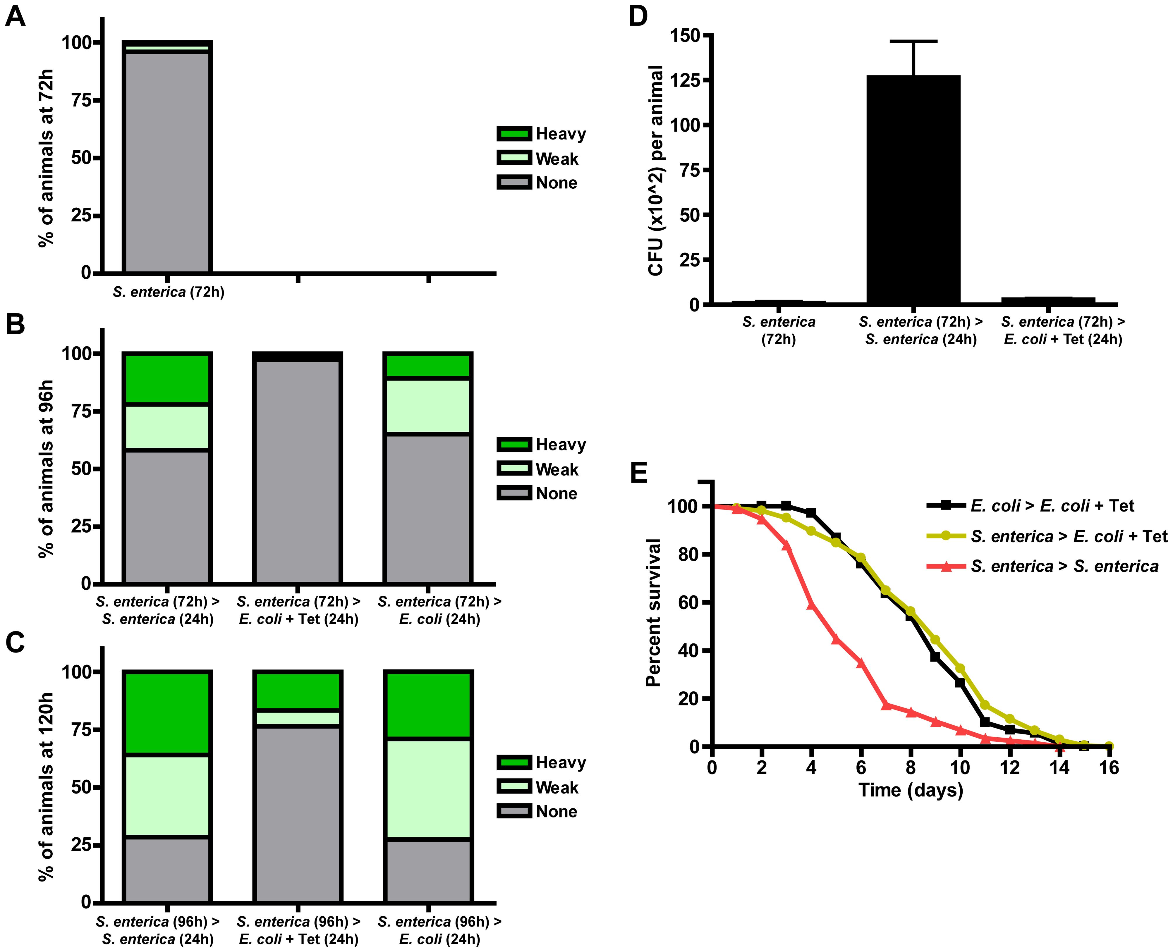 Tetracycline treatment models <i>S. enterica</i> acute infection in <i>C. elegans</i>.
