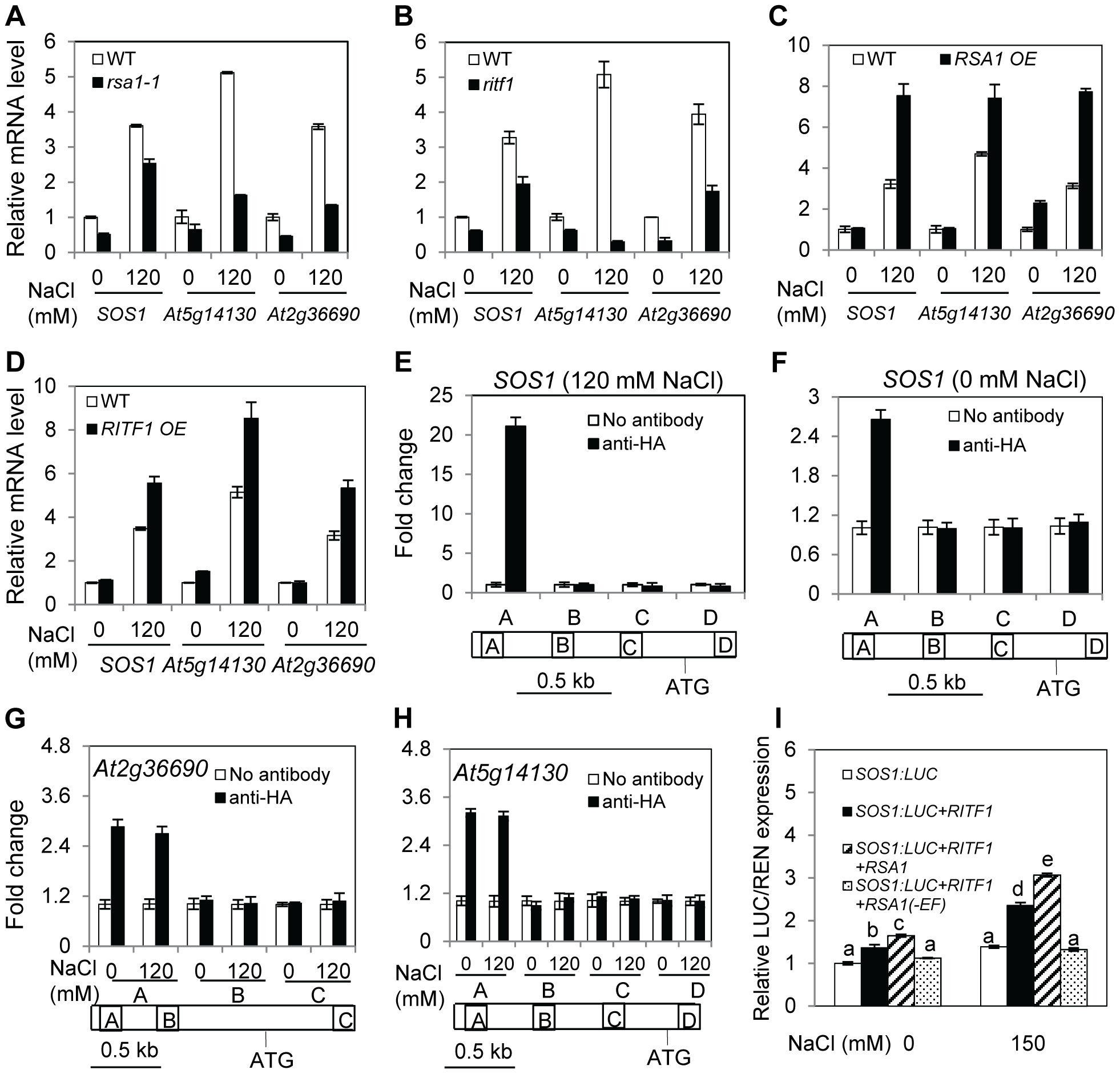 RSA1 and RITF1 regulate gene expression, and RITF1 binds directly to promoters of three RSA1 target genes.