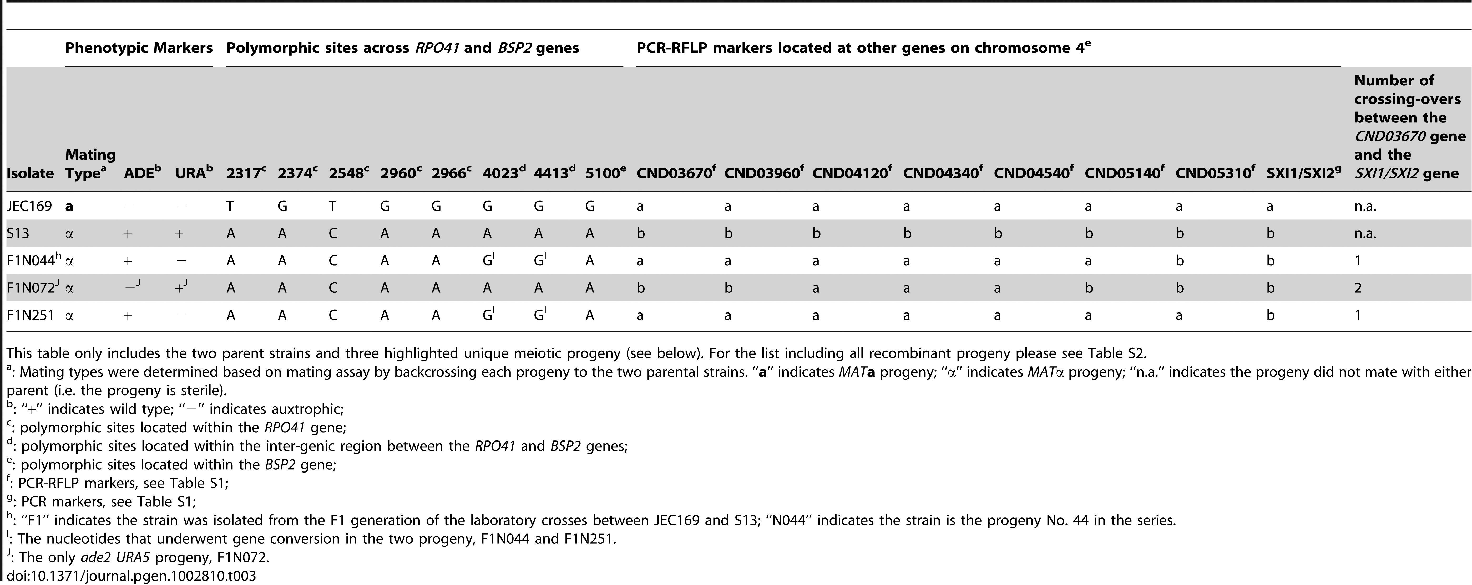 Genotypes of the two parental strains and representative recombinant progeny at the 18 markers screened in this study.
