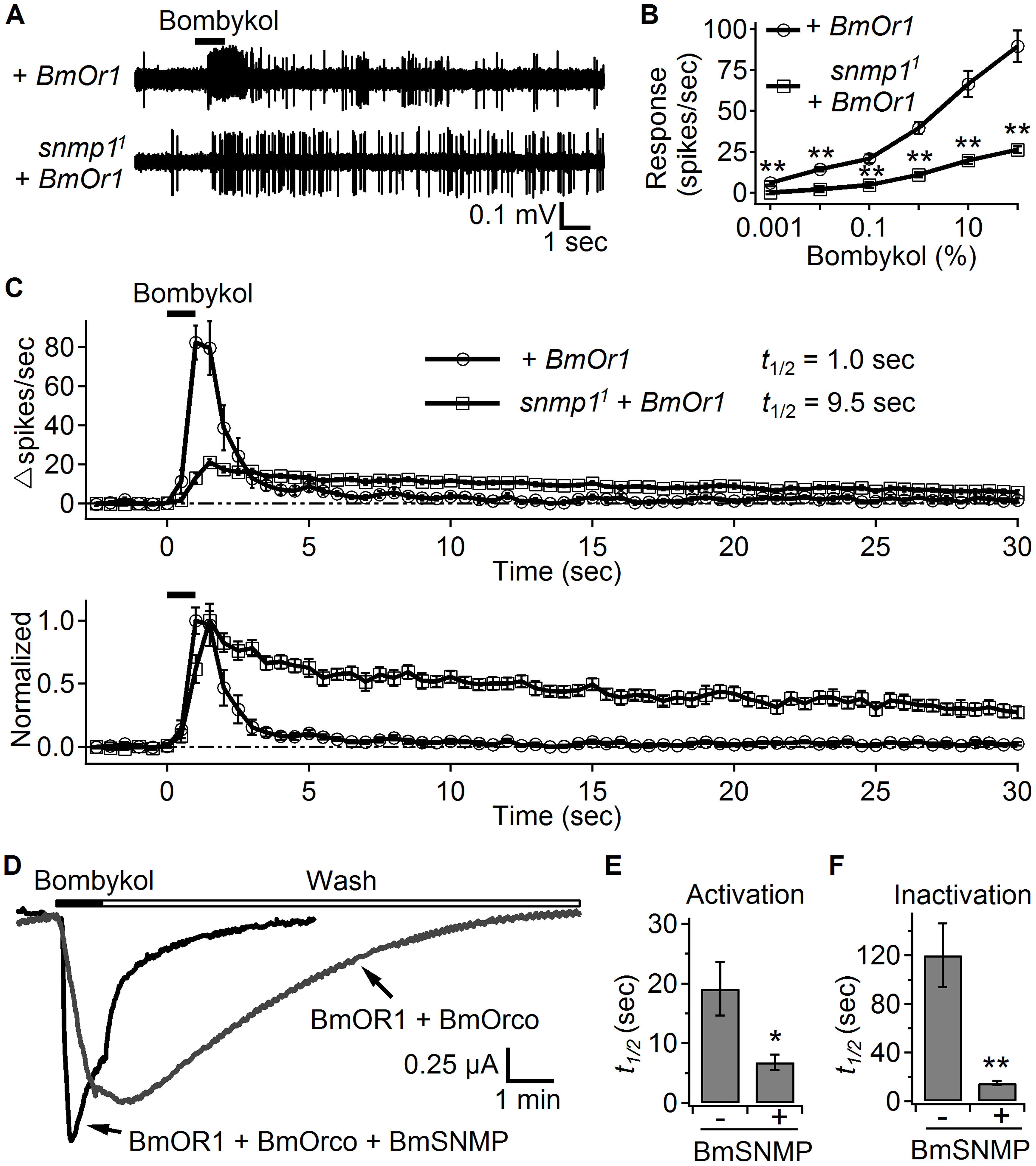SNMP1 affects the response to bombykol in OR67d ORNs ectopically expressing BmOR1.