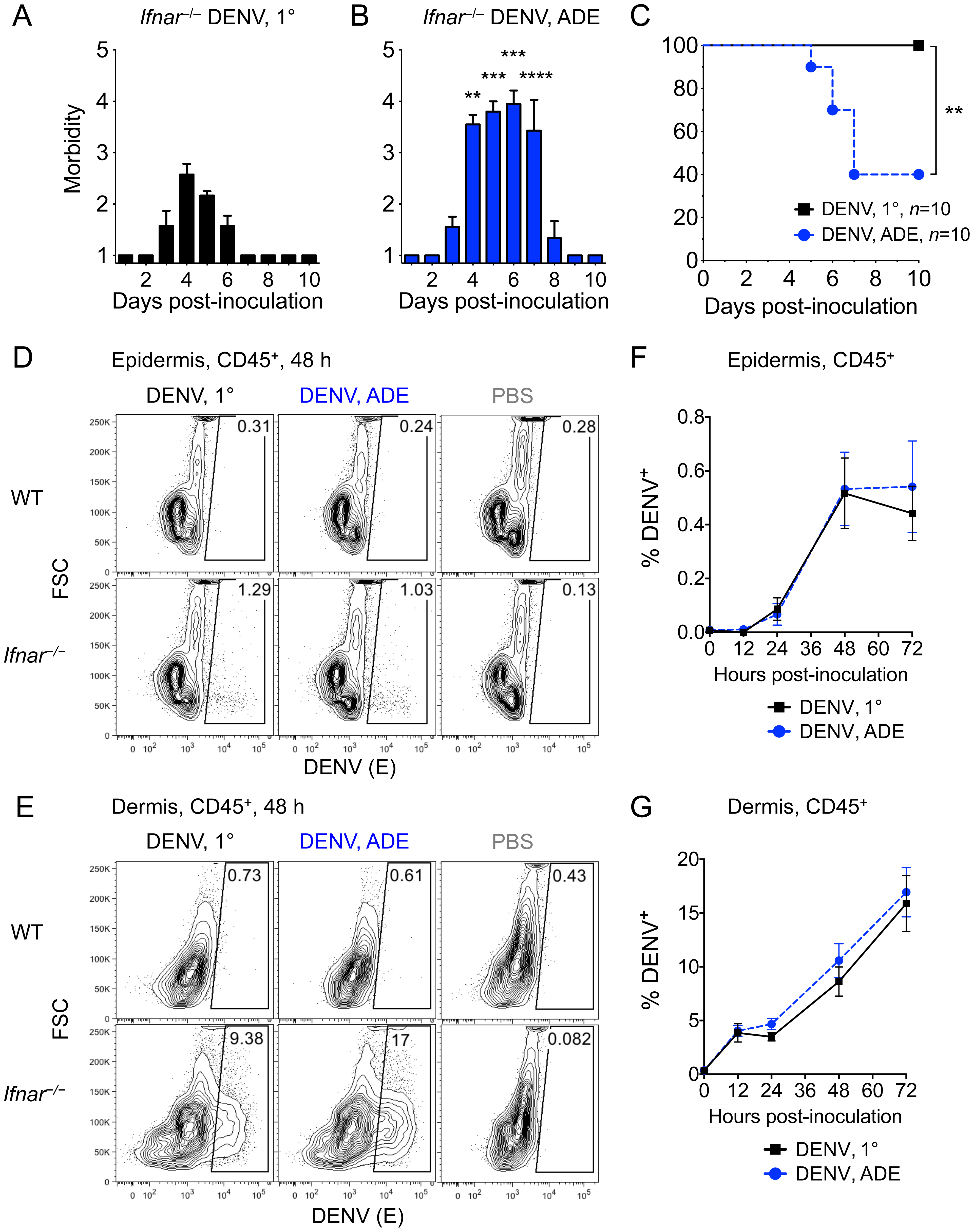 DENV2 infection of the skin in <i>Ifnar</i><sup>–/–</sup> but not WT mice and lethal disease during ADE.