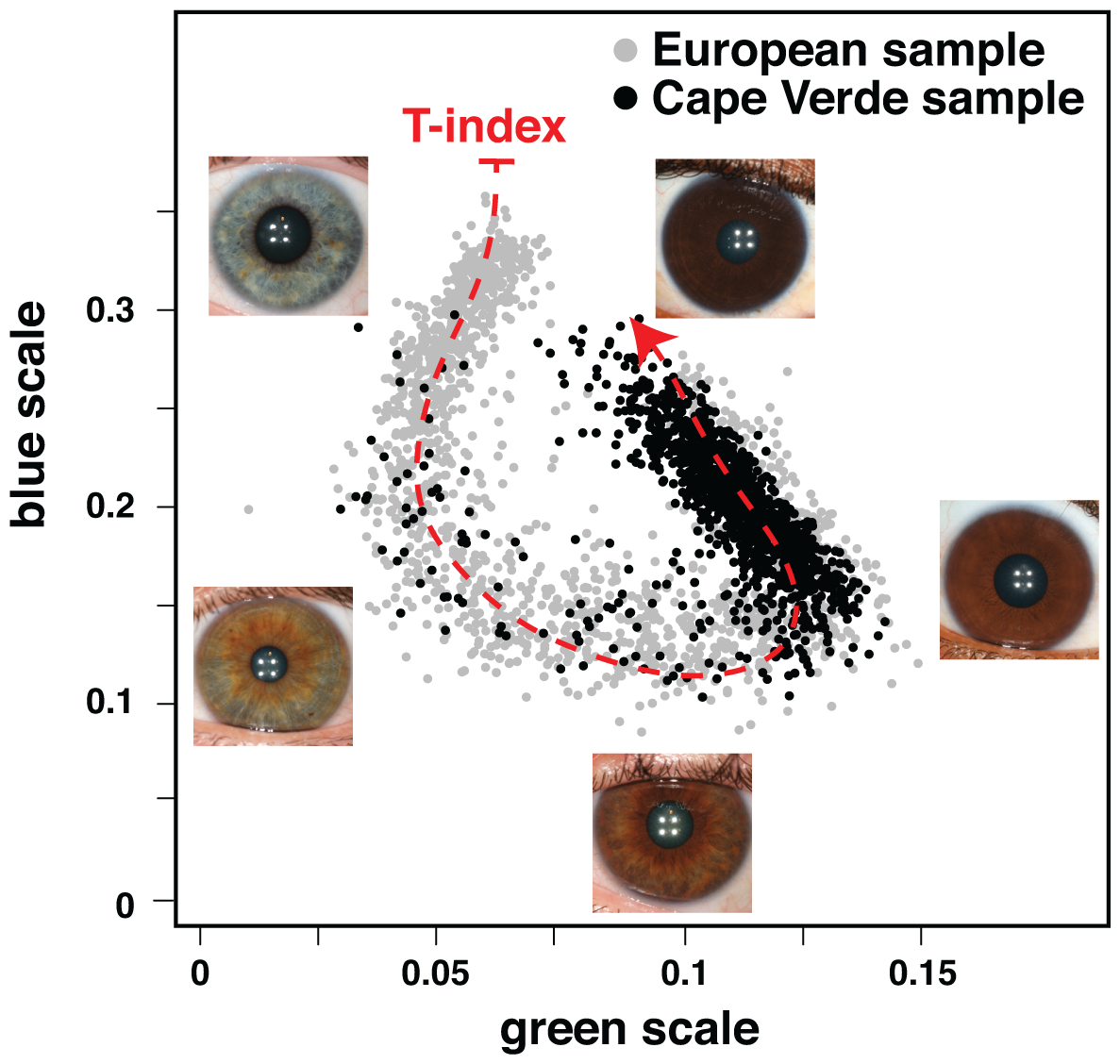 Quantitative assessment of eye color.