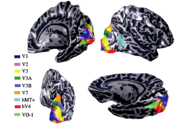 """Zrakové korové mapy Mozková kůra je počítačovým programem """"rozbalena"""" do plochy, takže jsou vyobrazeny jak závity, tak rýhy mezi nimi. Jednotlivé zrakové korové mapy zjištěné funkčními metodami jsou označeny symbolem a barvou (16) ."""