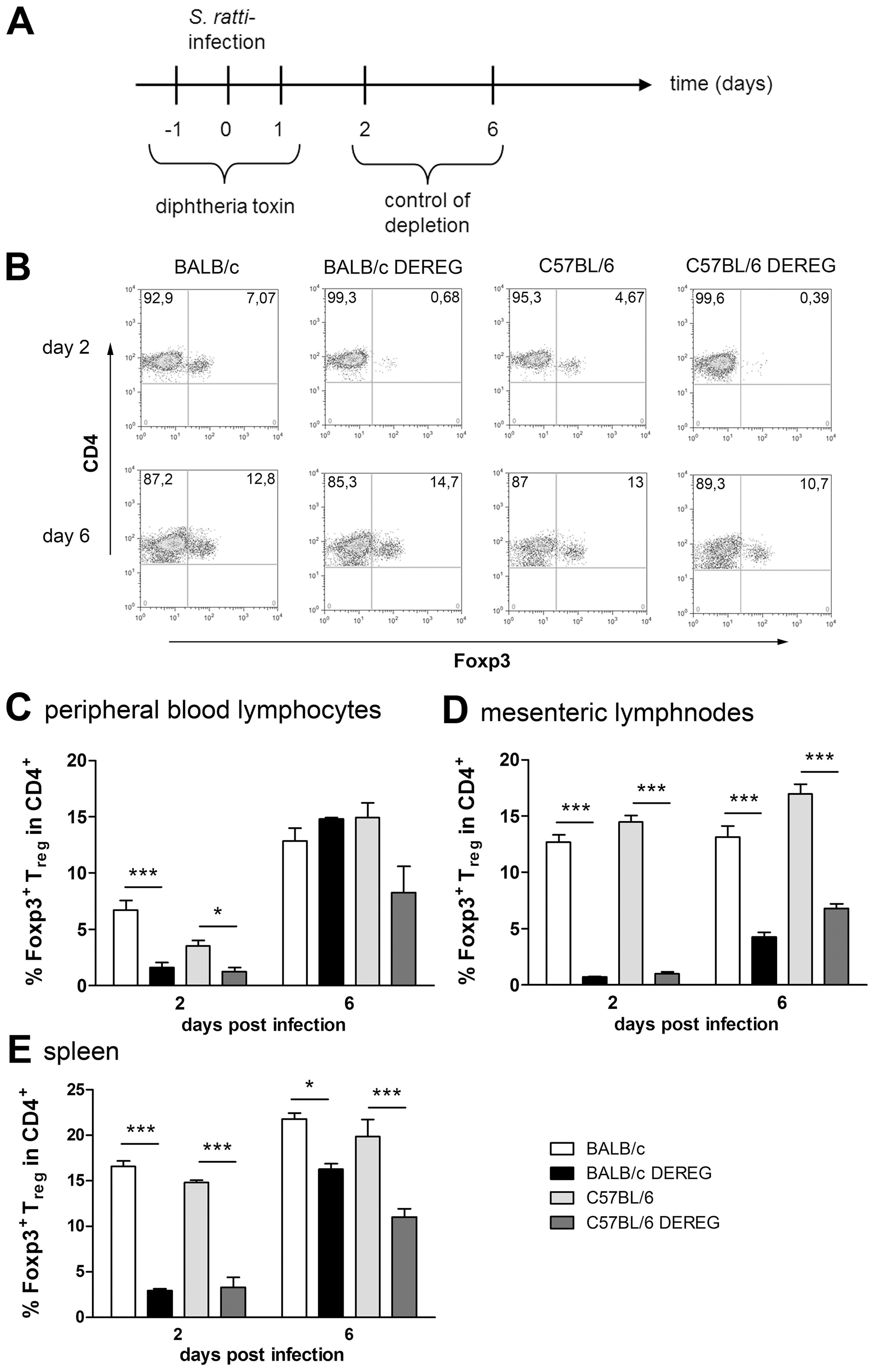 Depletion efficacy of Treg in BALB/c DEREG and C57BL/6 DEREG mice.
