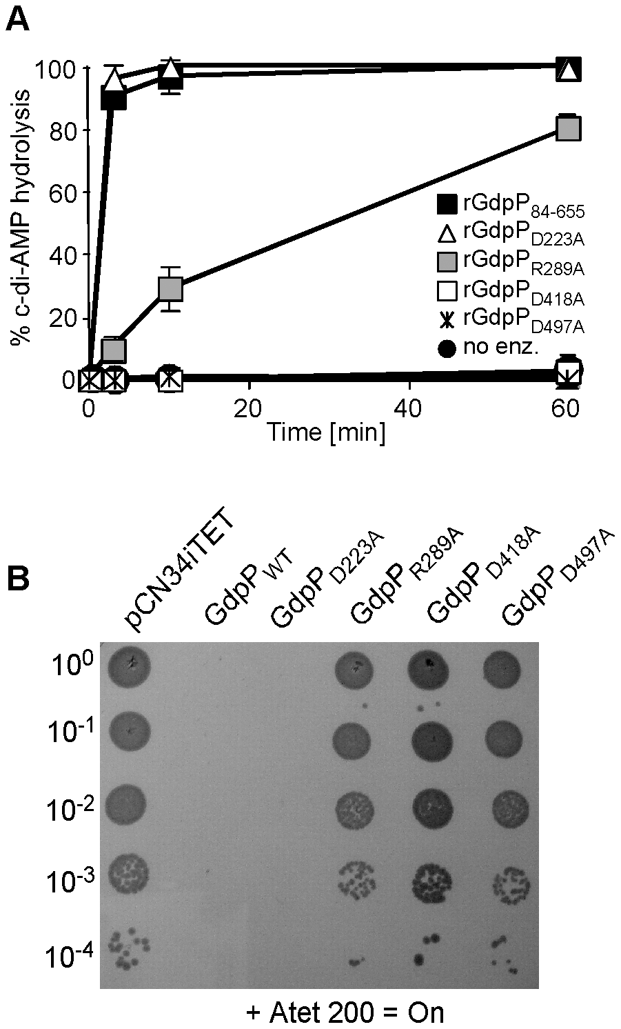 Disruption of GdpP phosphodiesterase activity compensates for a lack of LTA.
