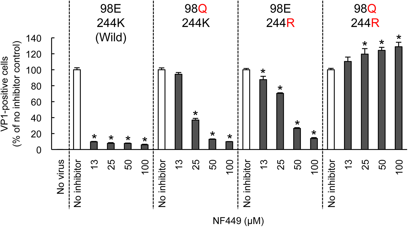 Mutations at the 5-fold capsid vertex reduce the protective effect of NF449.