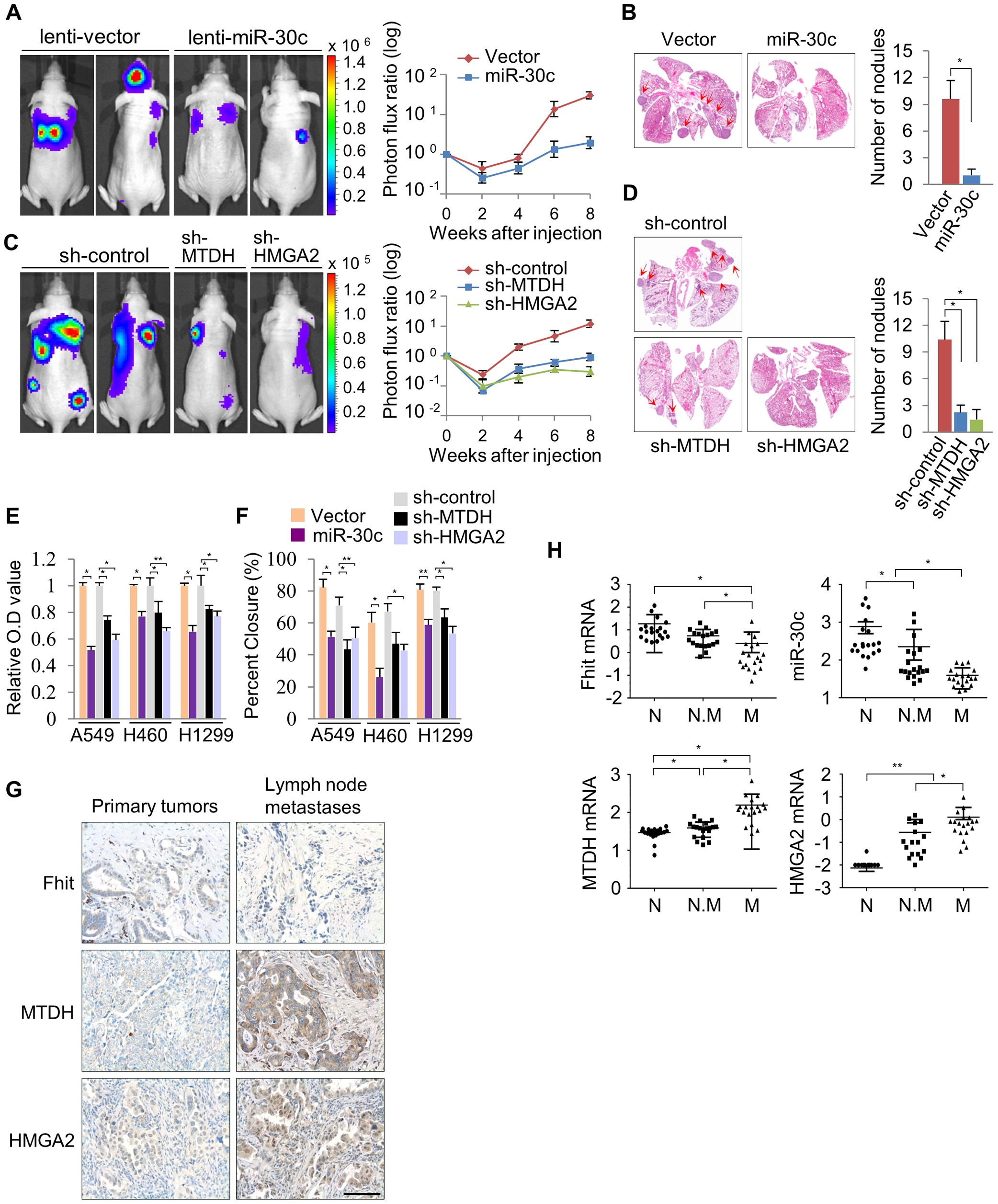 miR-30c inhibits metastasis through the suppression of MTDH and HMGA2 in NSCLCs.