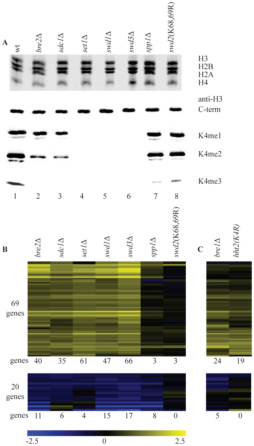 Loss of H3K4 di- and trimethylation results in upregulation of a subset of genes.