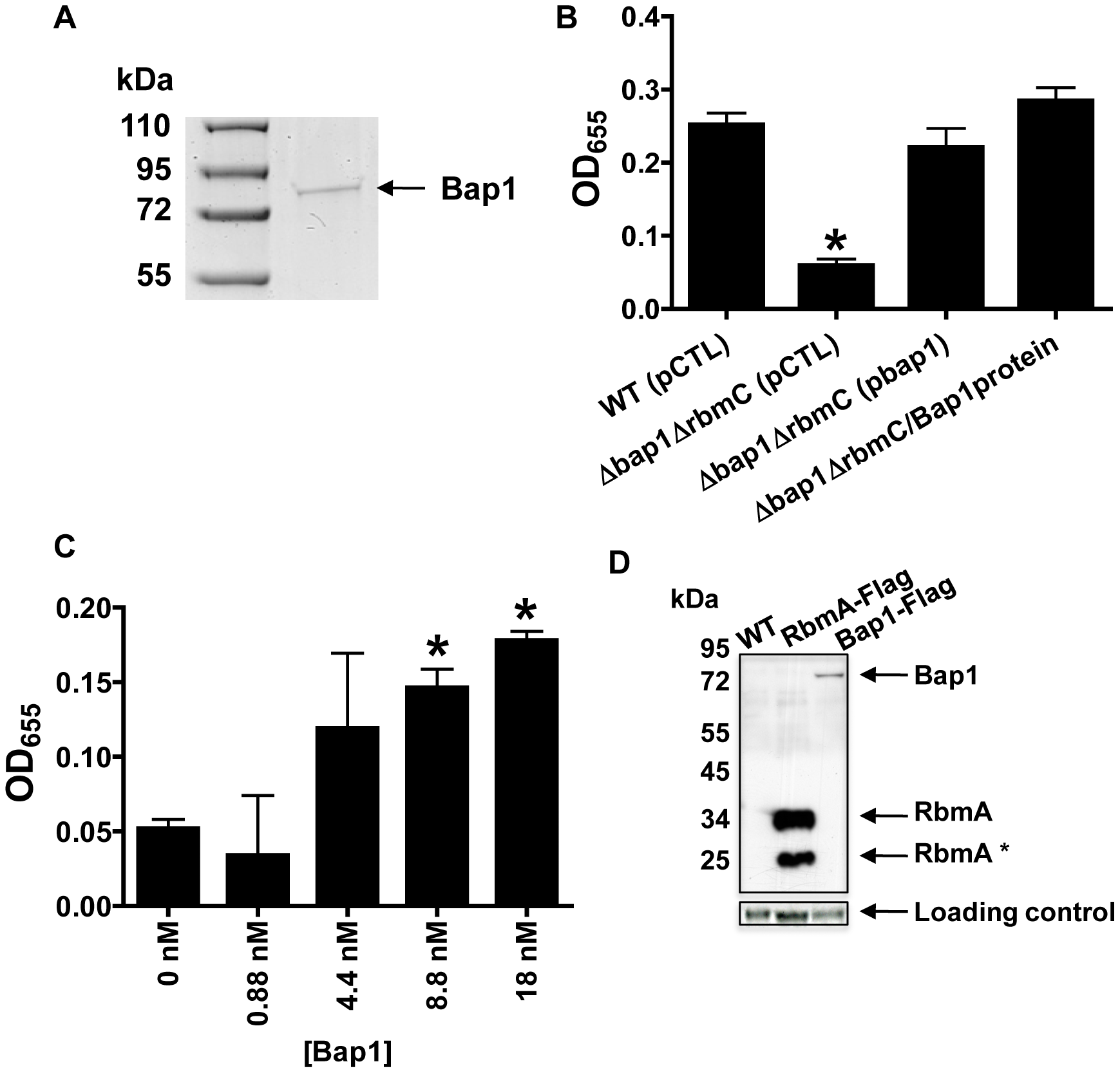 Purified Bap1-FLAG restores biofilm formation to a Δ<i>bap1</i>Δ<i>rbmC</i> mutant.
