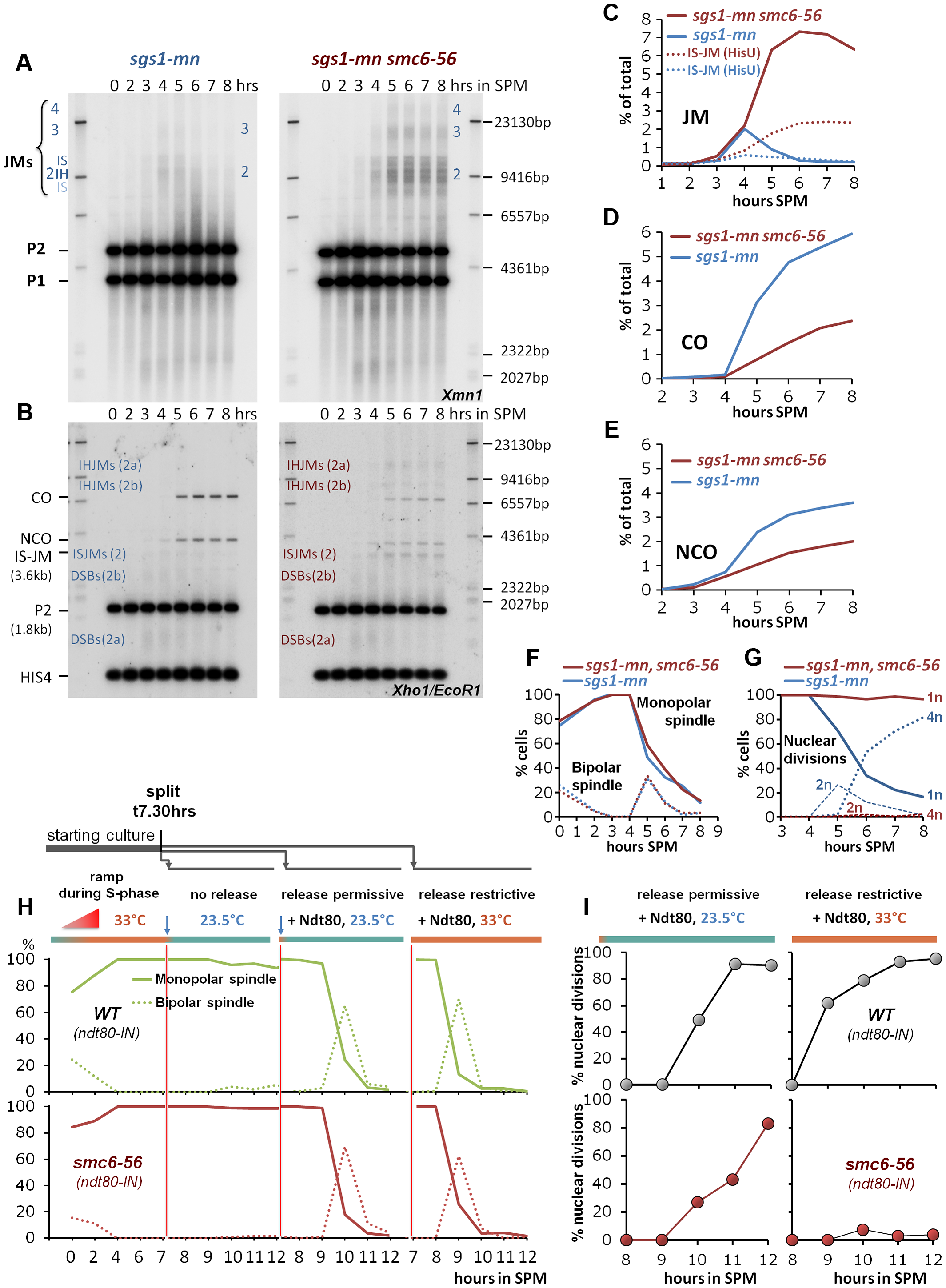 """The Smc5/6-Mms21 complex is required for the function of the """"rogue JM resolvases""""."""