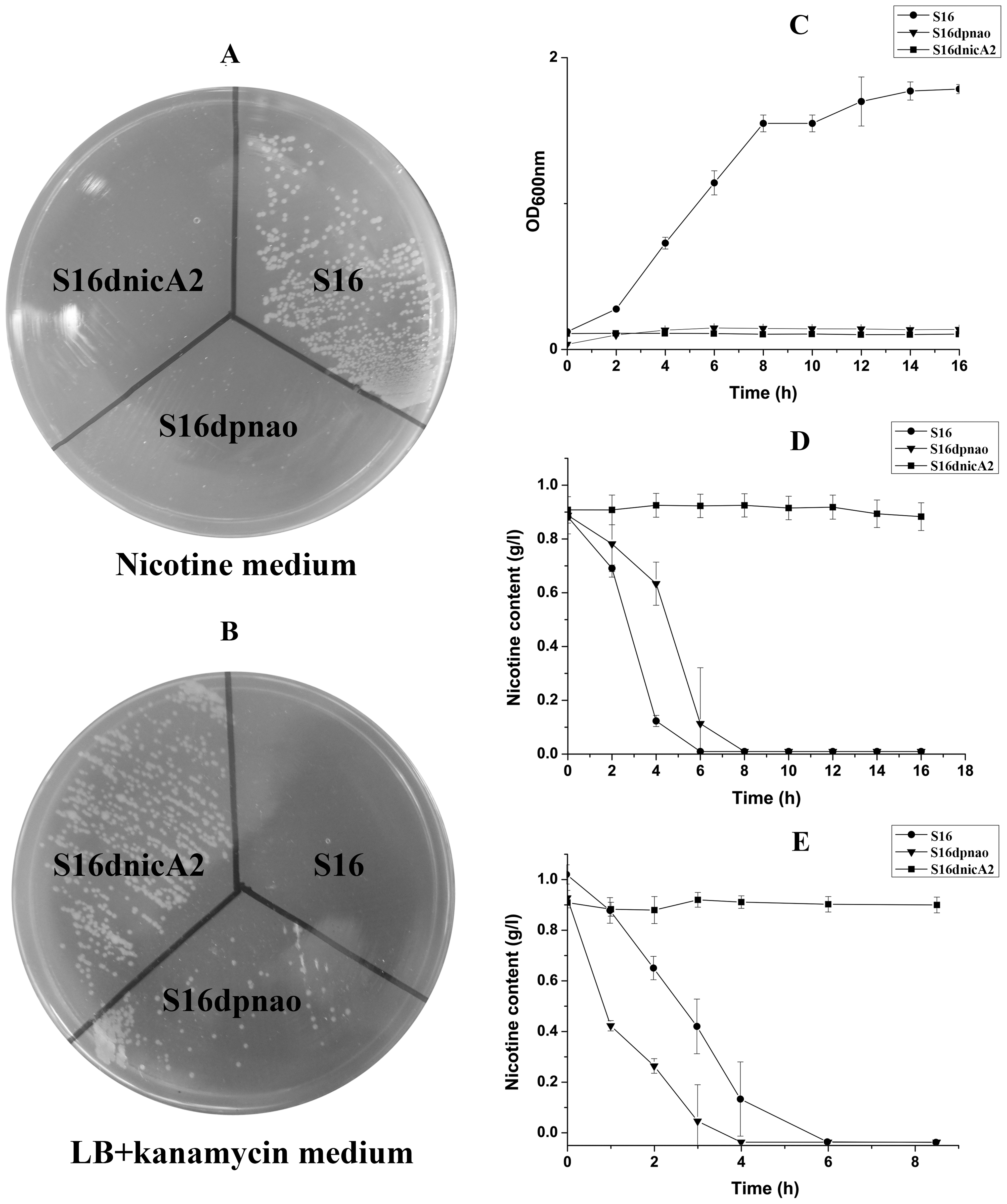 Cell growth and resting cell reactions of strain S16 and the gene deletion mutants.