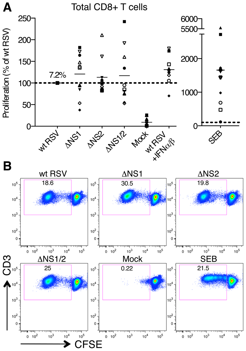 Proliferation of CD8+ T cells during co-cultivation with autologous DC that had been pre-infected with wt RSV or its NS1/2 deletion mutants.