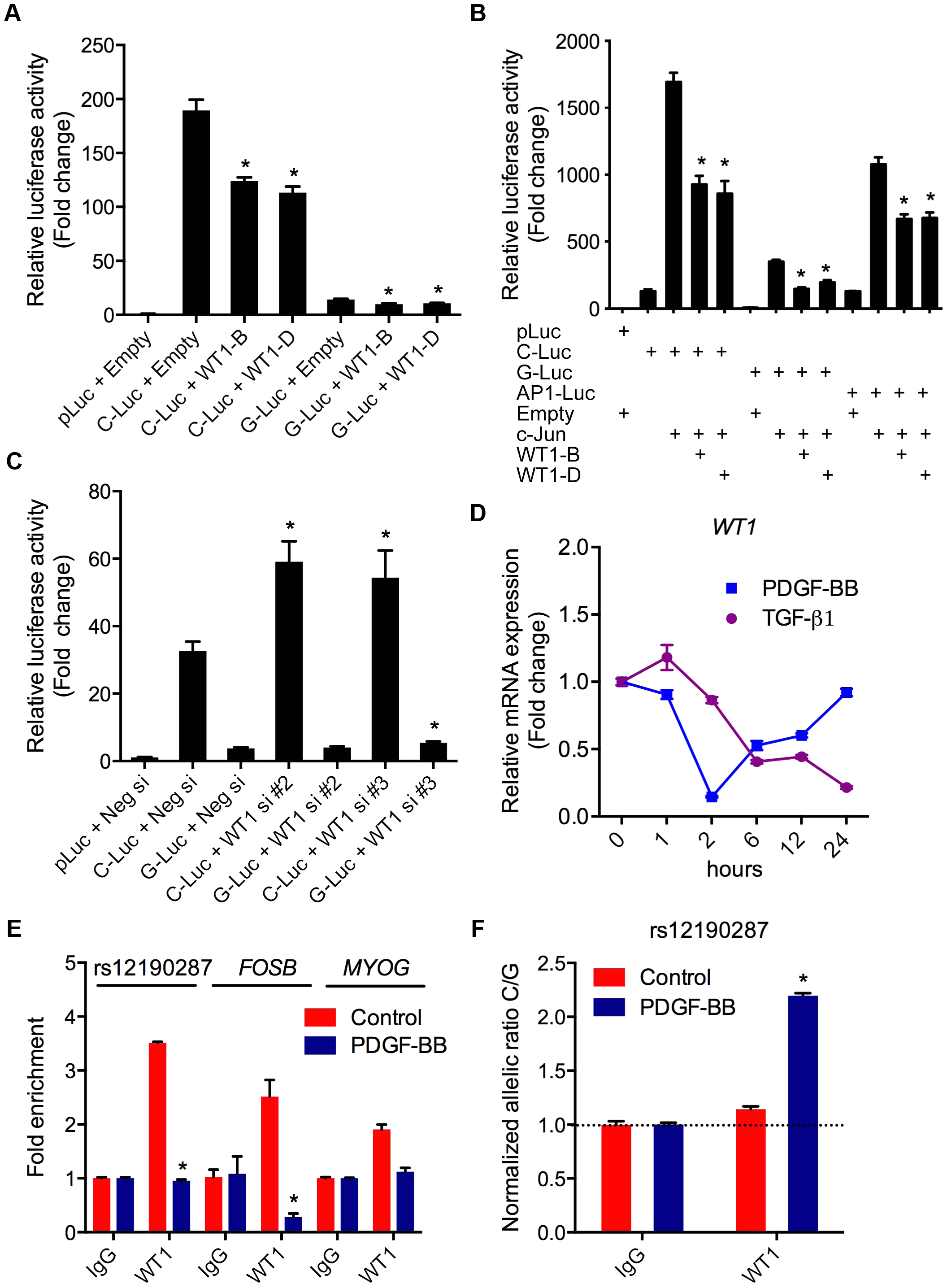 WT1 regulation of rs12190287 <i>in vitro</i> and <i>in vivo</i>.