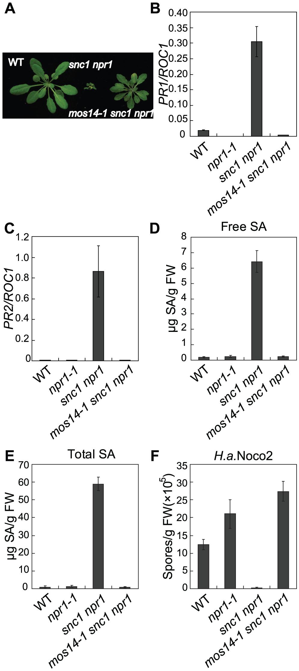 Constitutive immune responses in <i>snc1</i> are suppressed by <i>mos14-1</i>.