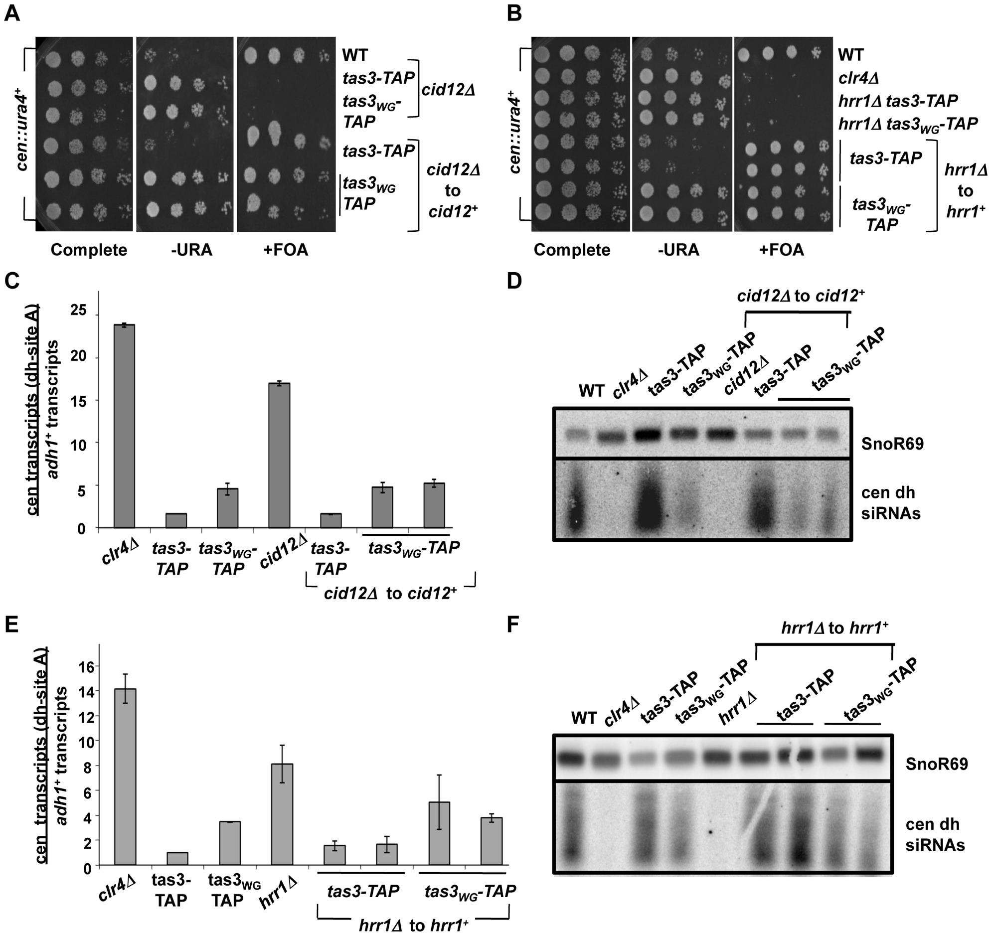 <i>cid12<sup>+</sup></i> and <i>hrr1<sup>+</sup></i> RDRC components are not required to initiate silencing of centromeric heterochromatin.