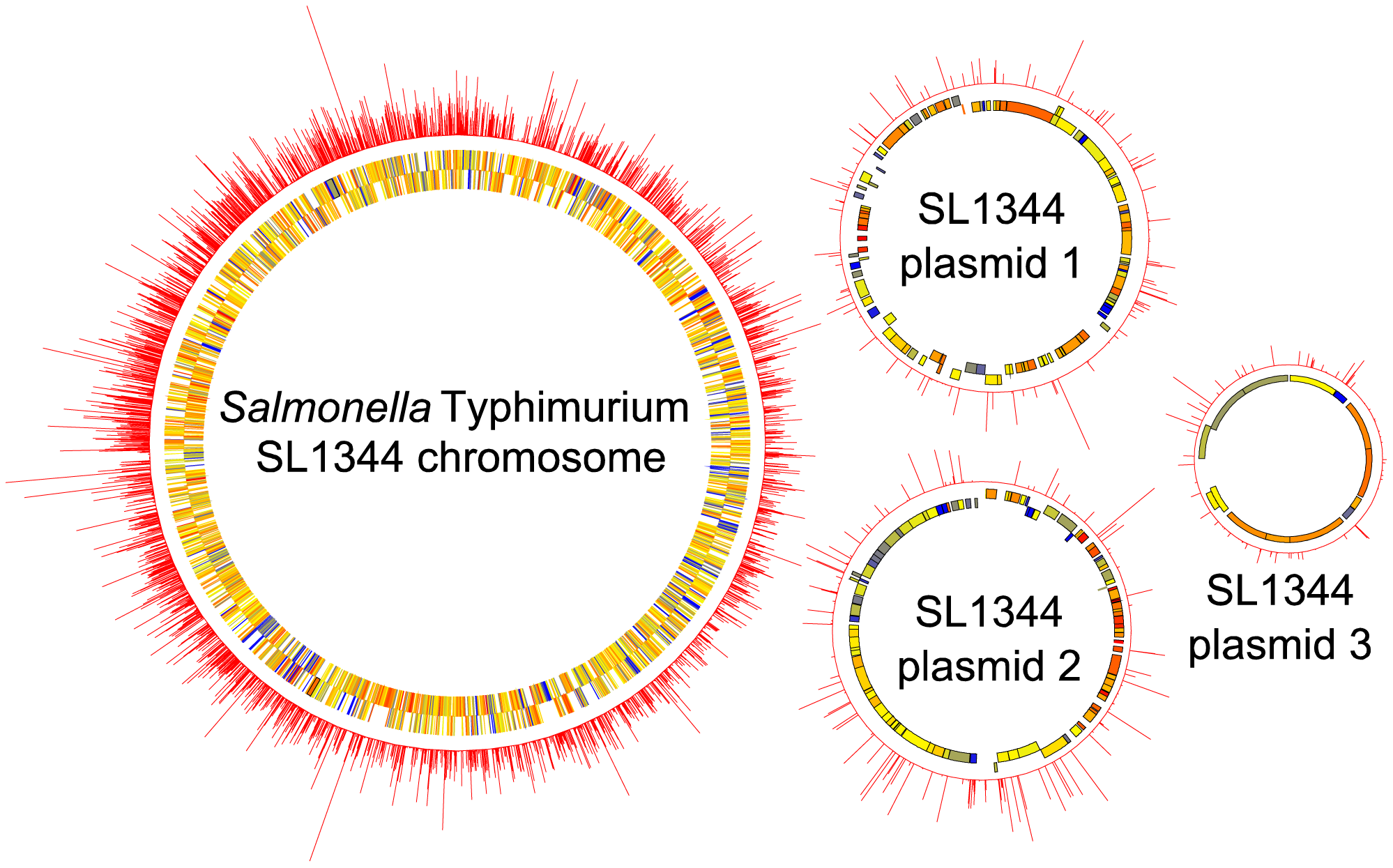 Circular diagrams of the <i>S.</i> Typhimurium SL1344 chromosome and plasmids (not to scale), showing the near random distribution and high density of transposon insertions mapped by TraDIS.