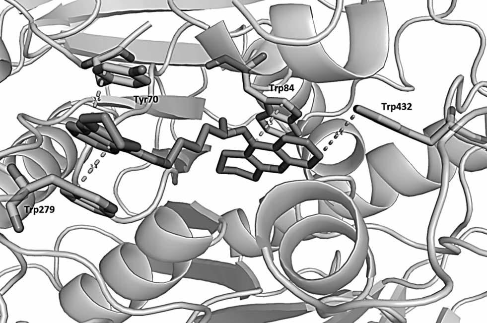 Prostorová orientace bis-7-takrinu v AChE z Torpedo californica (PDB code: 2ckm) a významné interakce s aminokyselinovými rezidui. Látka působí v periferním anionickém místě (Trp279, Tyr70) i katalytické části enzymu (Trp84,Trp432) a svou délkou mezi oběma takrinovými částmi dává látce charakter duálního inhibitoru. Vzdálenost je udávána v angstromech (Å). Obrázek byl vytvořen pomocí PyMol viewer (v. 1.3.)<sup>38)</sup>.