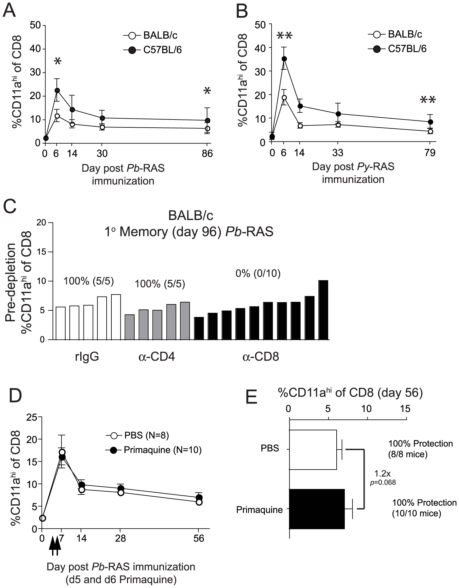 The magnitude and kinetics of RAS-vaccination-induced CD8 T cell responses in BALB/c and C57BL/6 inbred mice.