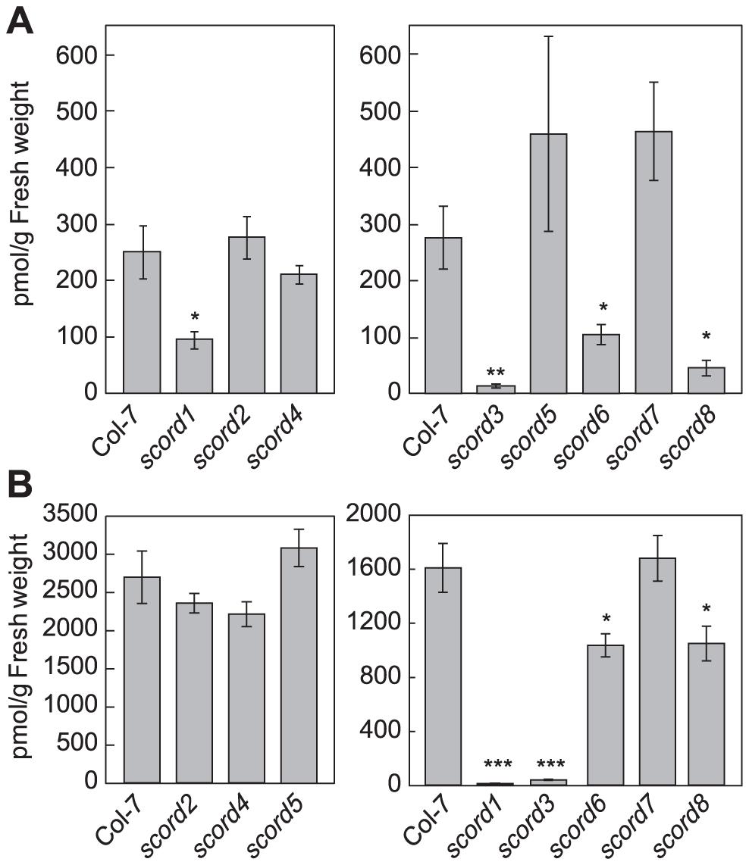 Salicylic acid (SA) levels in leaves of Col-7 and <i>scord</i> mutants.