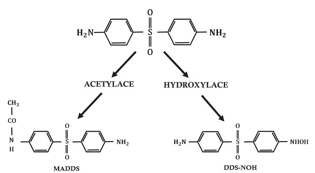 Metabolické cesty dapsonu
