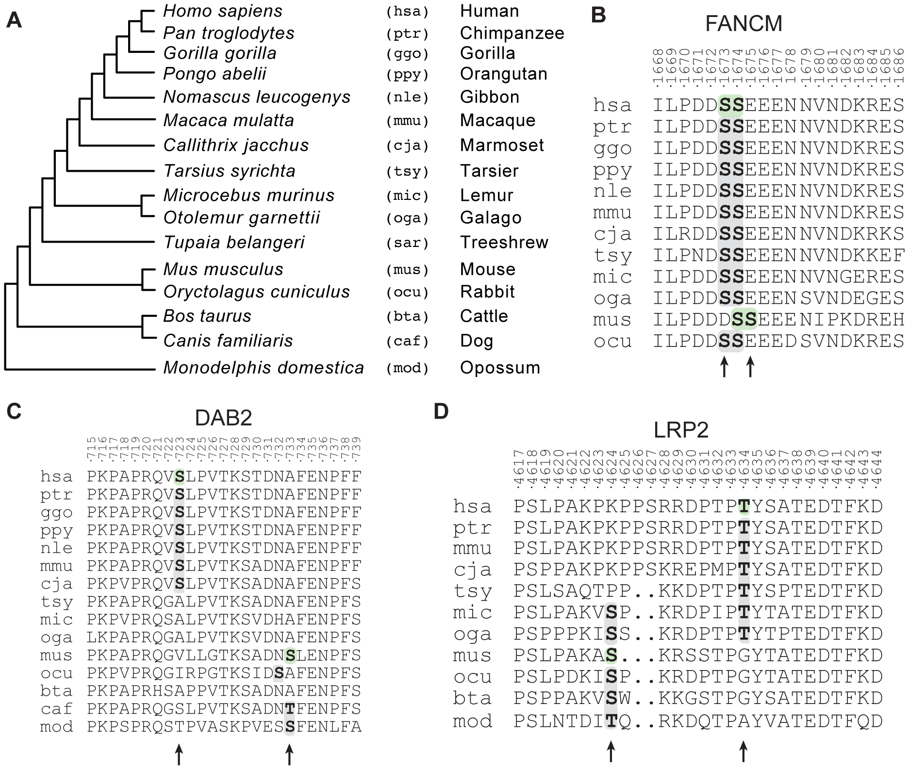 Evolutionary histories of candidate functionally redundant site pairs.
