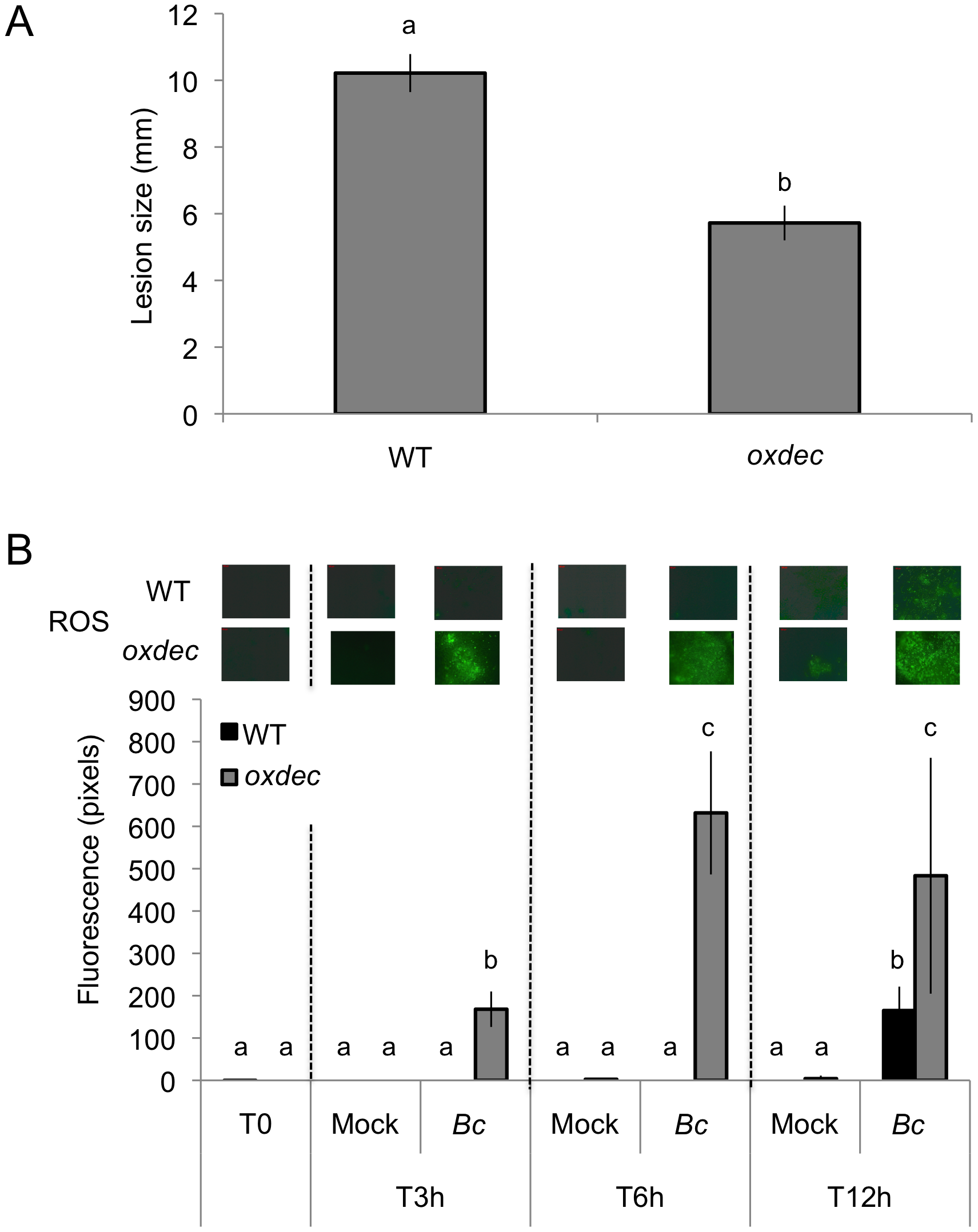 Effect of <i>OXALATE DECRABOXYLASE</i> over expression in <i>A. thaliana</i> on resistance to <i>B. cinerea</i> and ROS production.