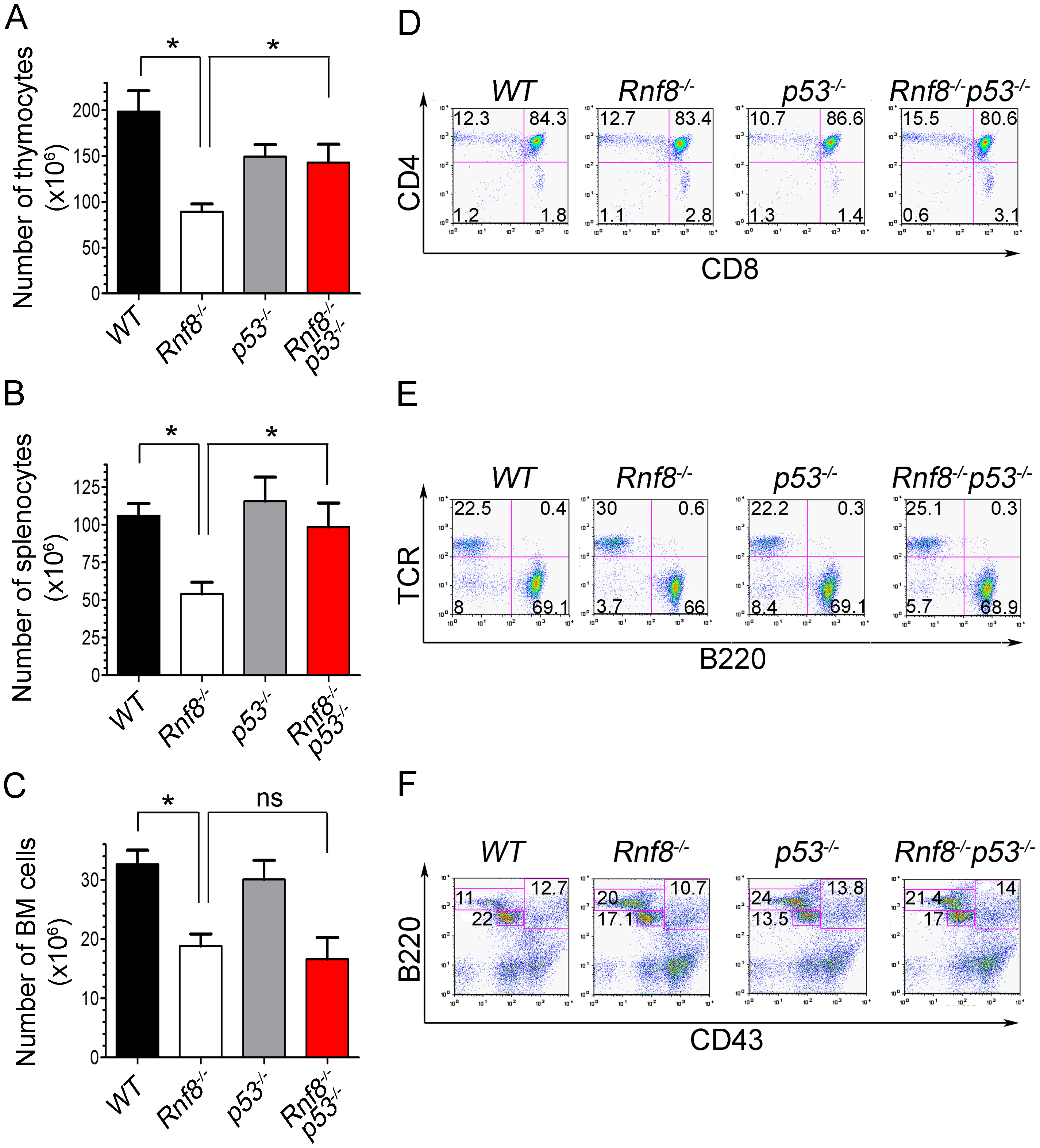 p53 loss rescues homeostasis of thymocytes and splenocytes, but not bone marrow populations deficient for Rnf8.