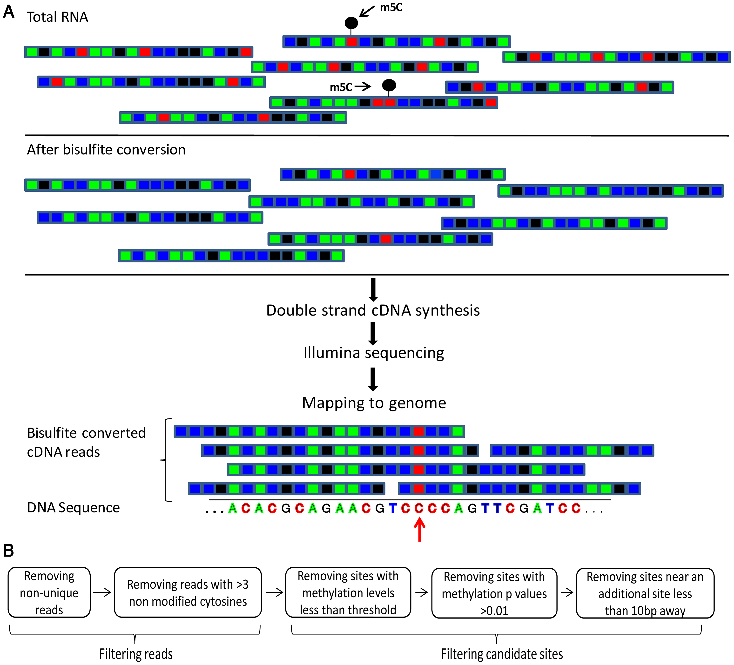 Flow of the bisulfite-treatment/RNA-seq experiment.