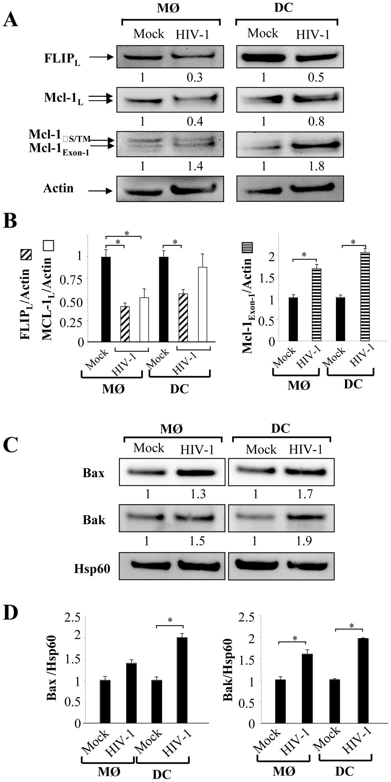 Expression of pro- and anti-apoptotic molecules in HIV-1 infected monocyte-derived macrophages and monocyte-derived DCs.