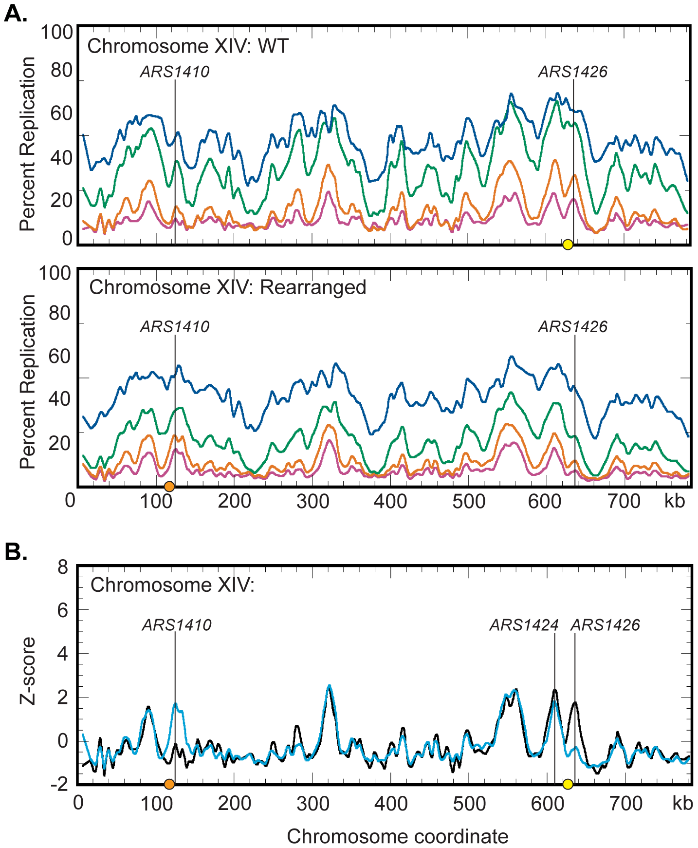 Replication dynamics for chromosome XIV in WT and rearranged strains.