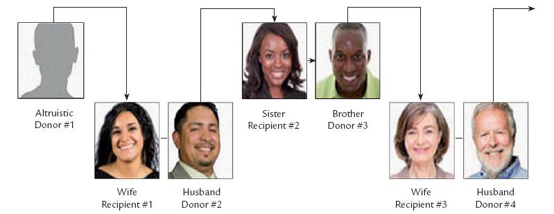 Schéma řetězové transplantace.