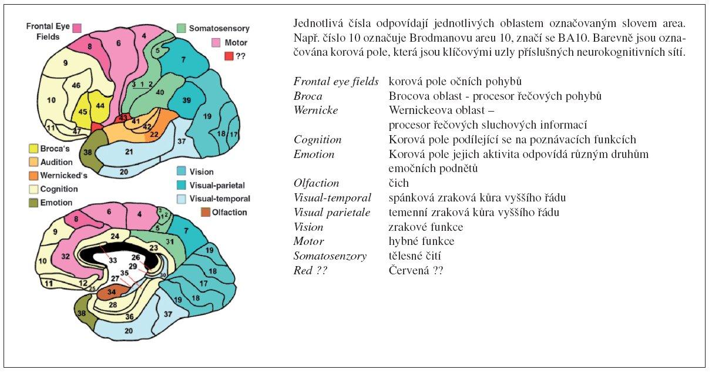 Brodmanova mapa cytoarchitektonických polí kůry lidského mozku