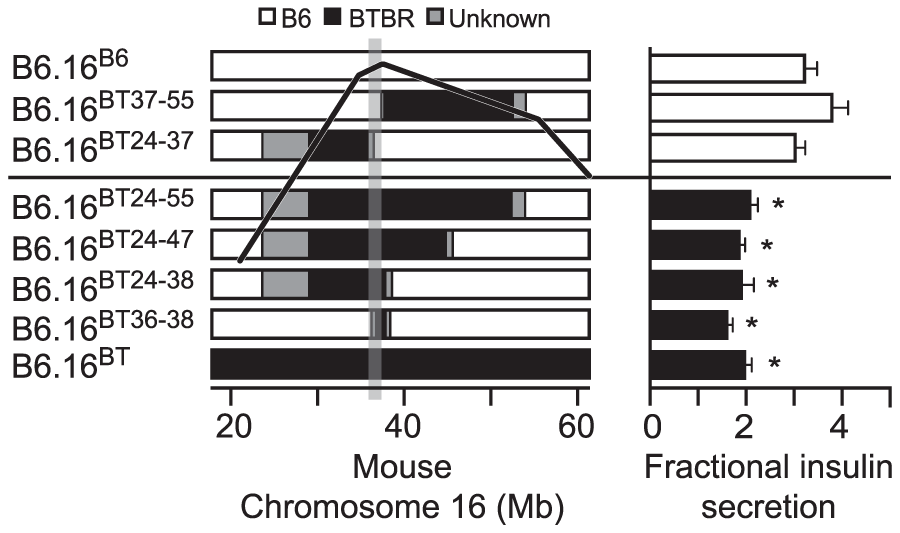 Effect on insulin secretion of introgressing 1.6 Mb of BTBR Chr 16 into B6 mice.