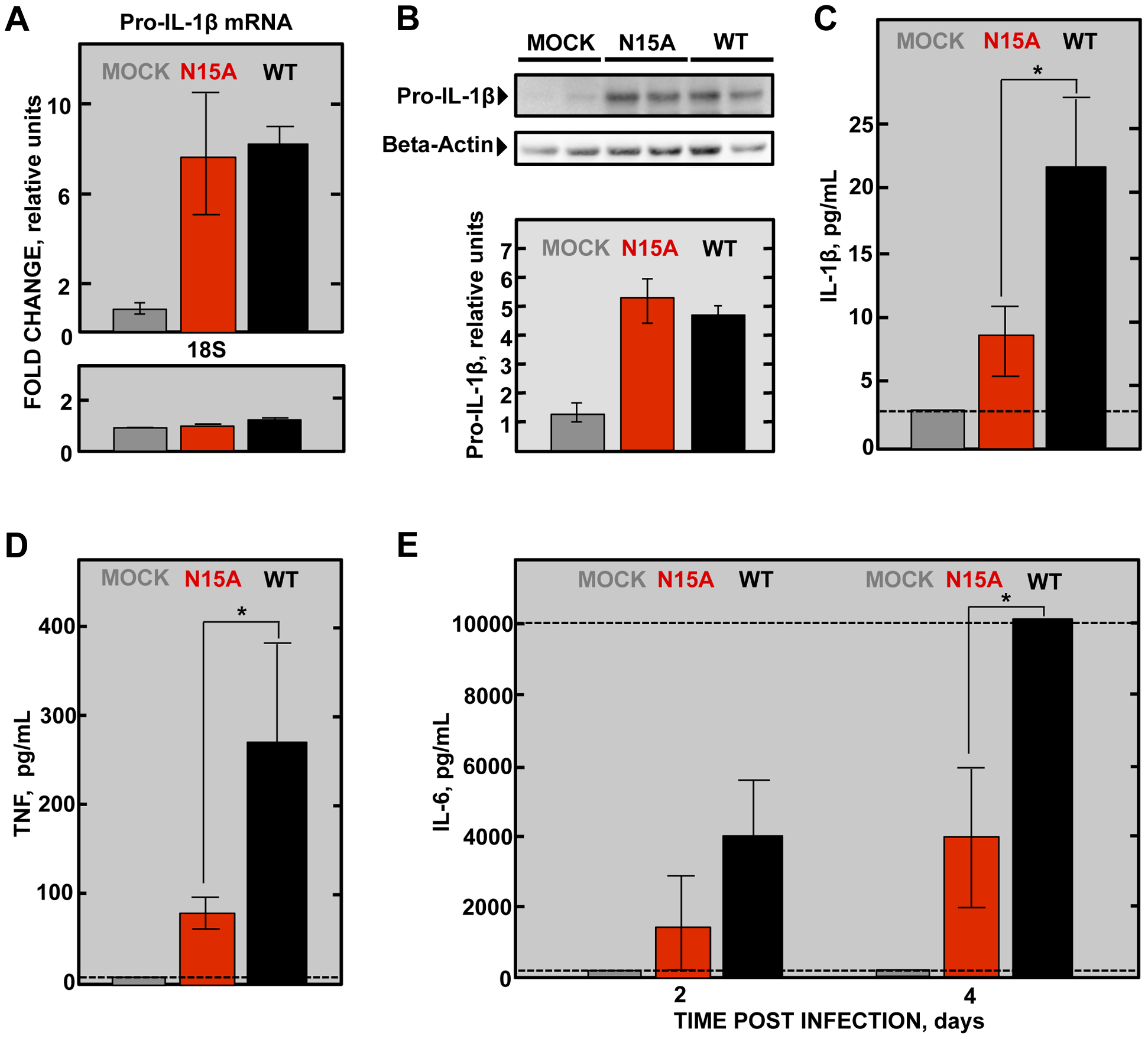 SARS-CoV E protein IC activity and induction of inflammatory cytokines involved in lung injury.