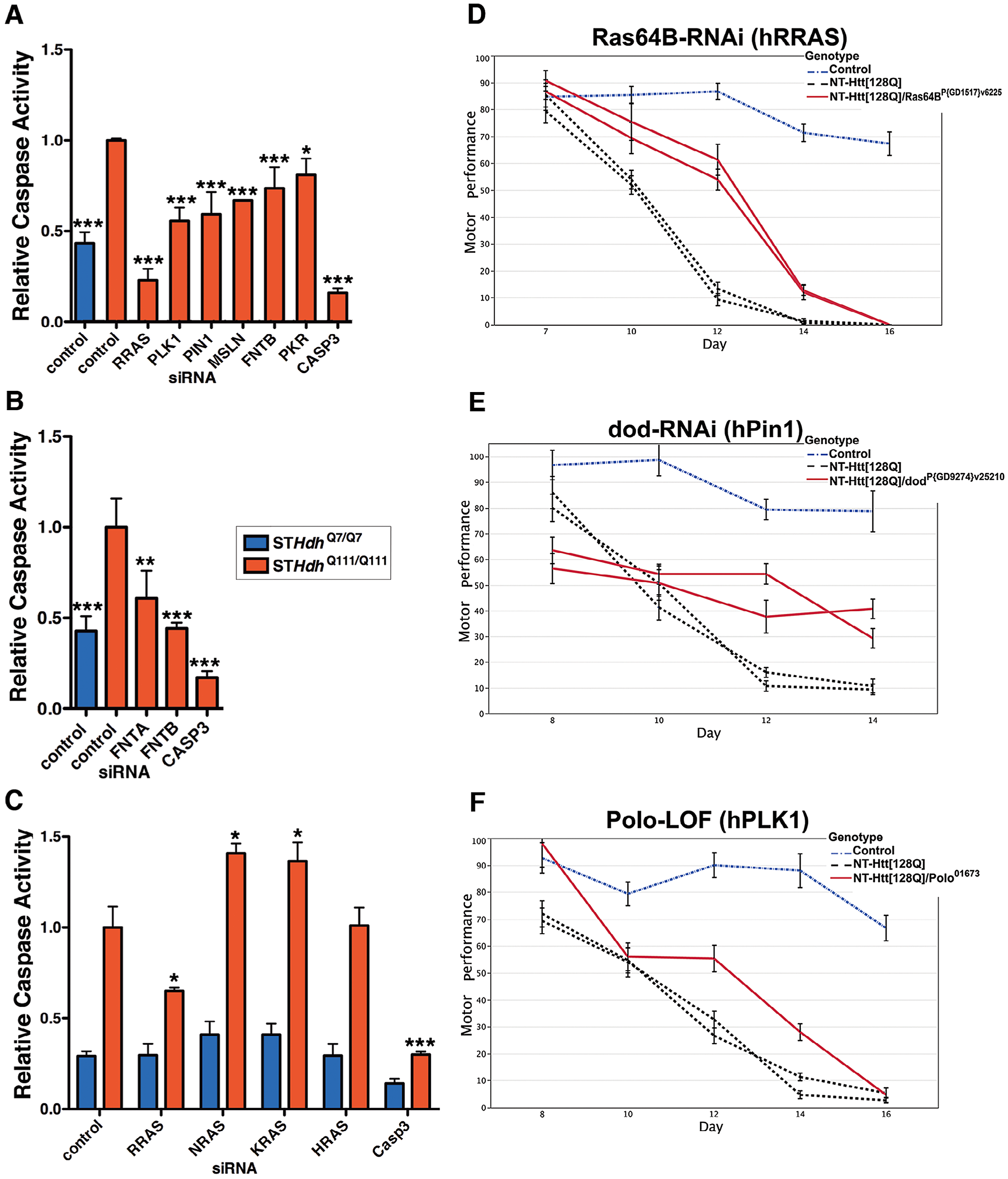Suppression of Htt Toxicity by Knock-Down of RRAS Signaling Is Conserved across HD Models.