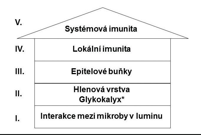 Obranná strategie trávicího systému. Upraveno podle J. Krejska et al. (5).