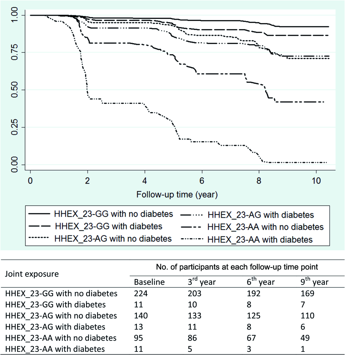 Kaplan–Meier survival estimates from baseline to dementia occurrence by diabetes (including prediabetes) and <i>HHEX_23</i> genotype (adjusted for age, sex, and education).