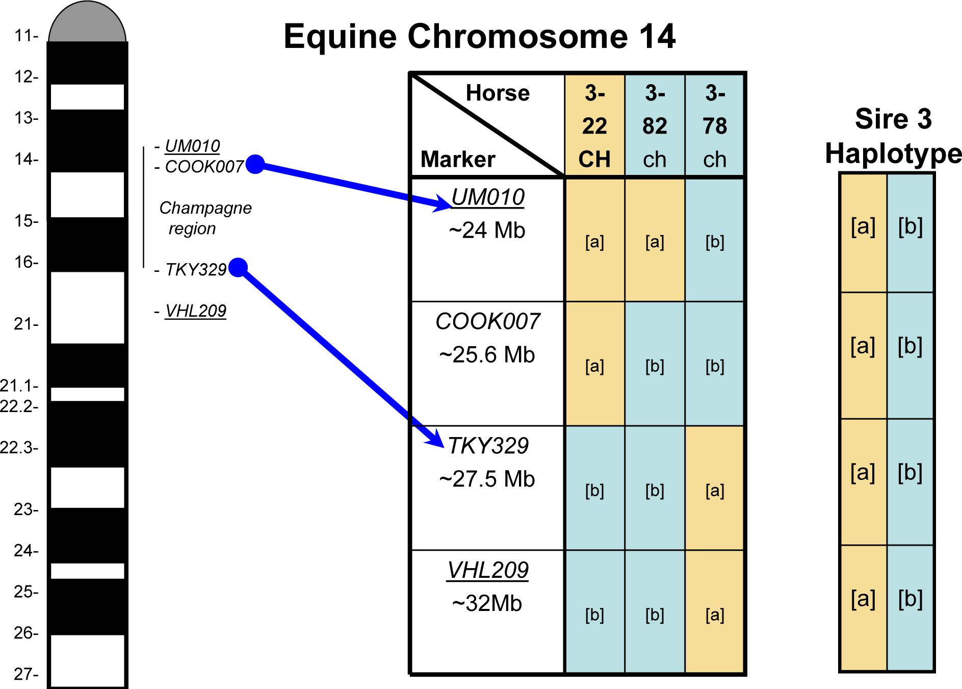 Example of Recombinant Haplotypes.