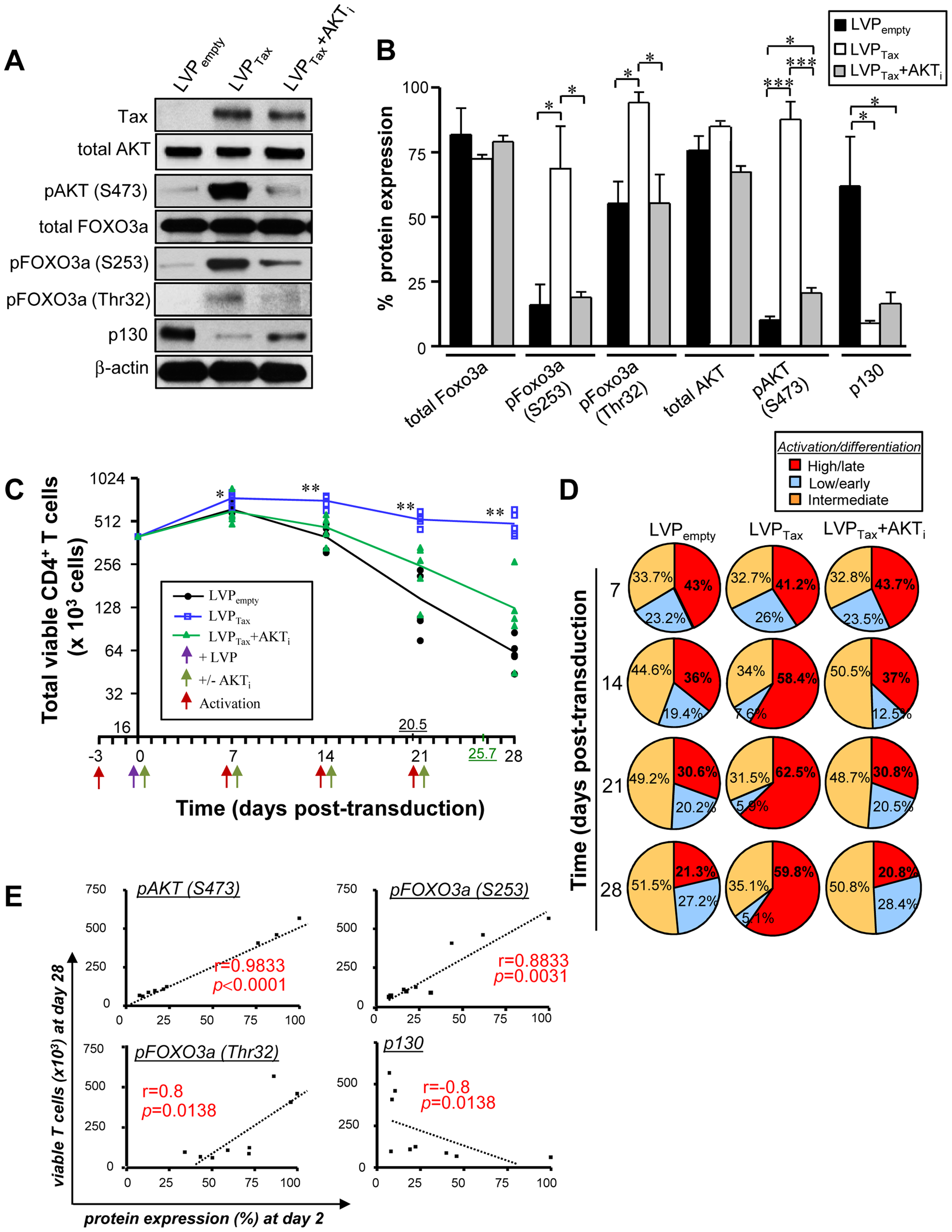 Tax-mediated FOXO3a inactivation is responsible for CD4<sup>+</sup> T cell persistence.