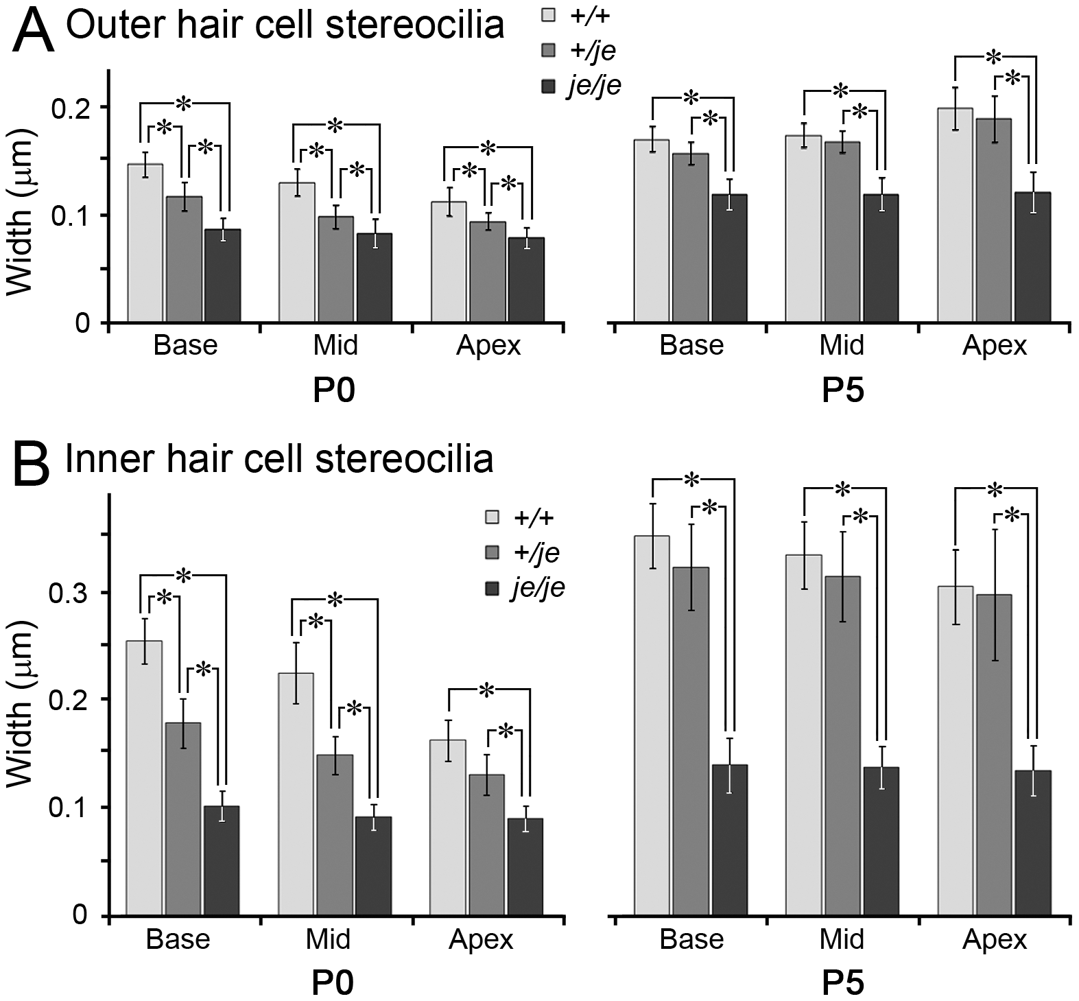 Stereociliary width measurements for cochlear hair cells in early postnatal <i>+/+</i>, <i>+/je</i>, and <i>je/je</i> mice.