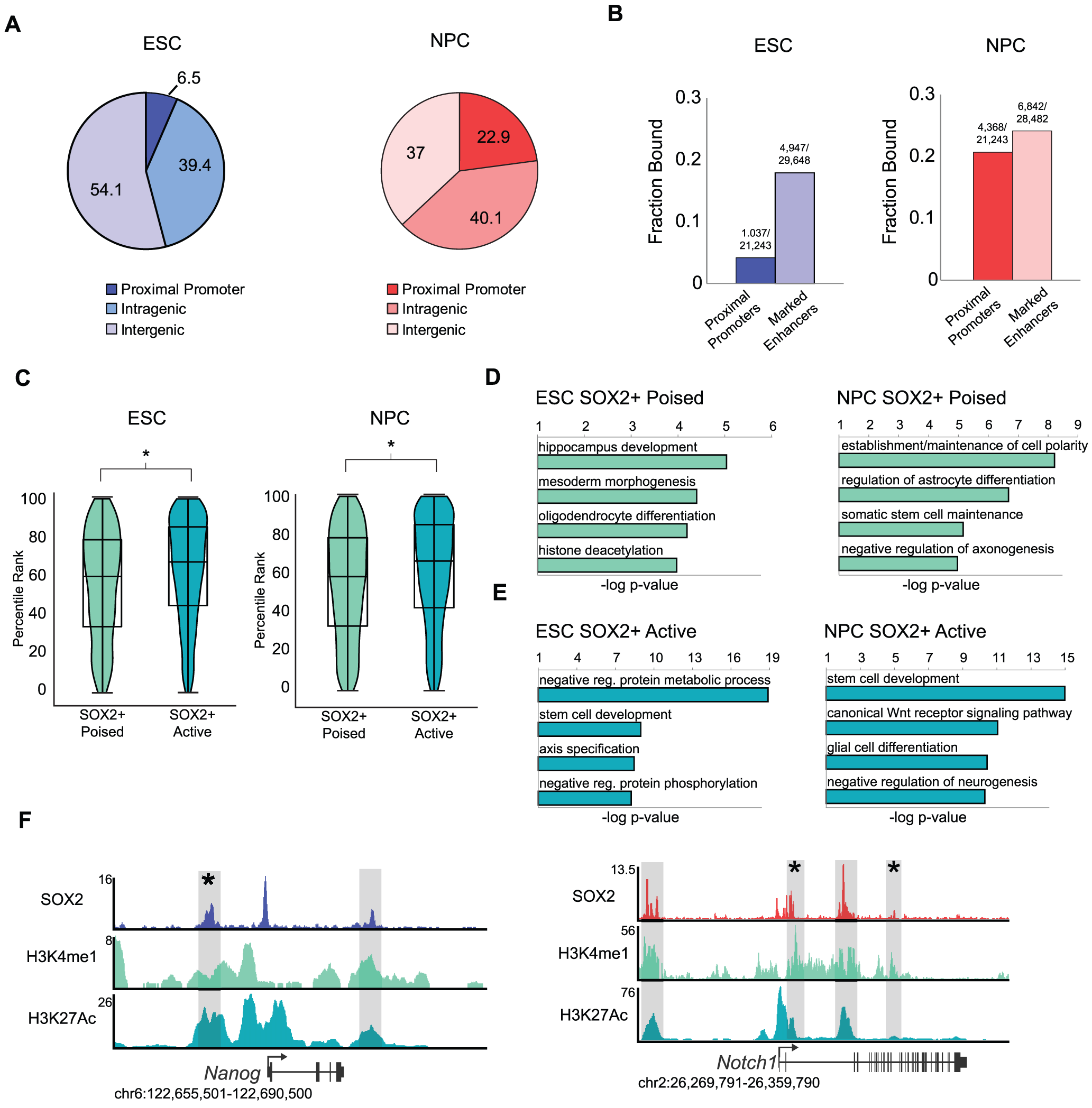 SOX2 binds distinct enhancer regions in ESCs and NPCs.