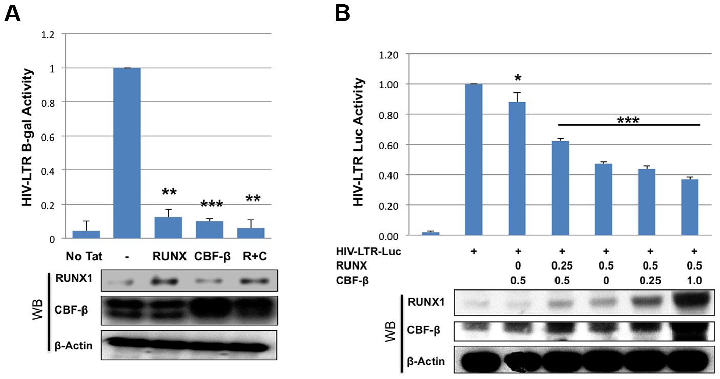 RUNX1 and CBF-β suppress LTR-driven promoter expression of the integrated and unintegrated LTR.