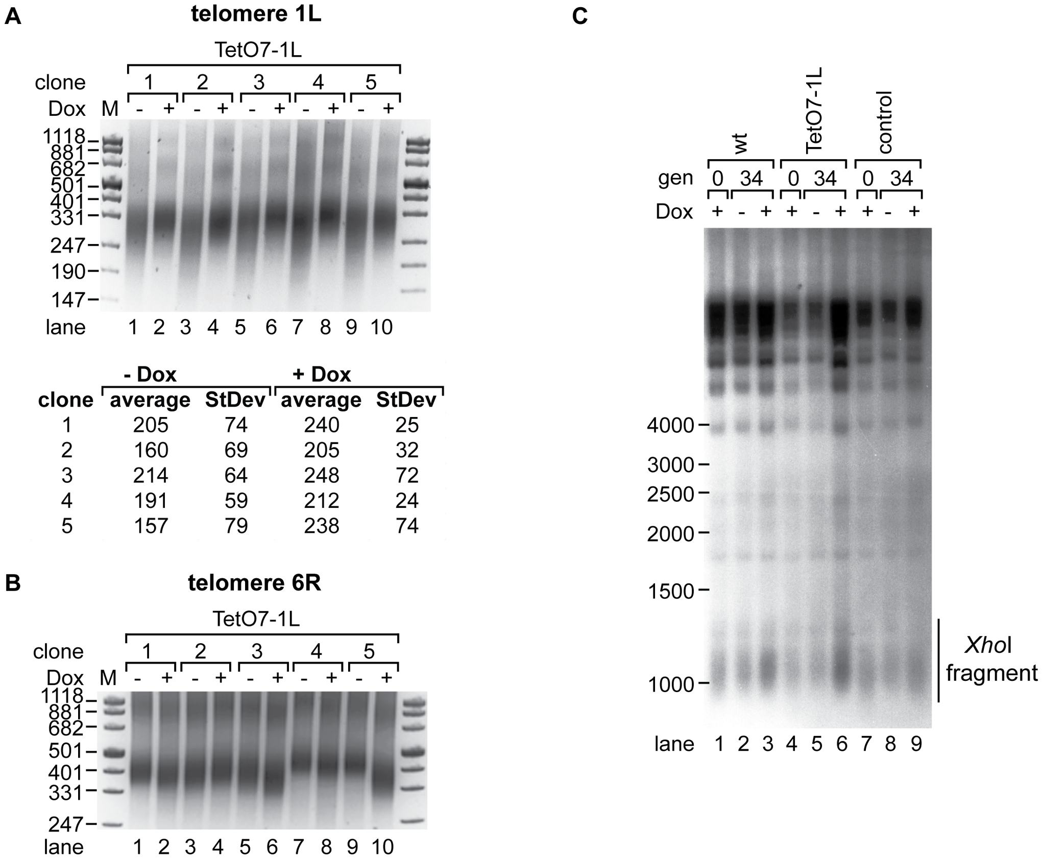 1L TERRA acts in cis and leads to shortening of telomere 1L.