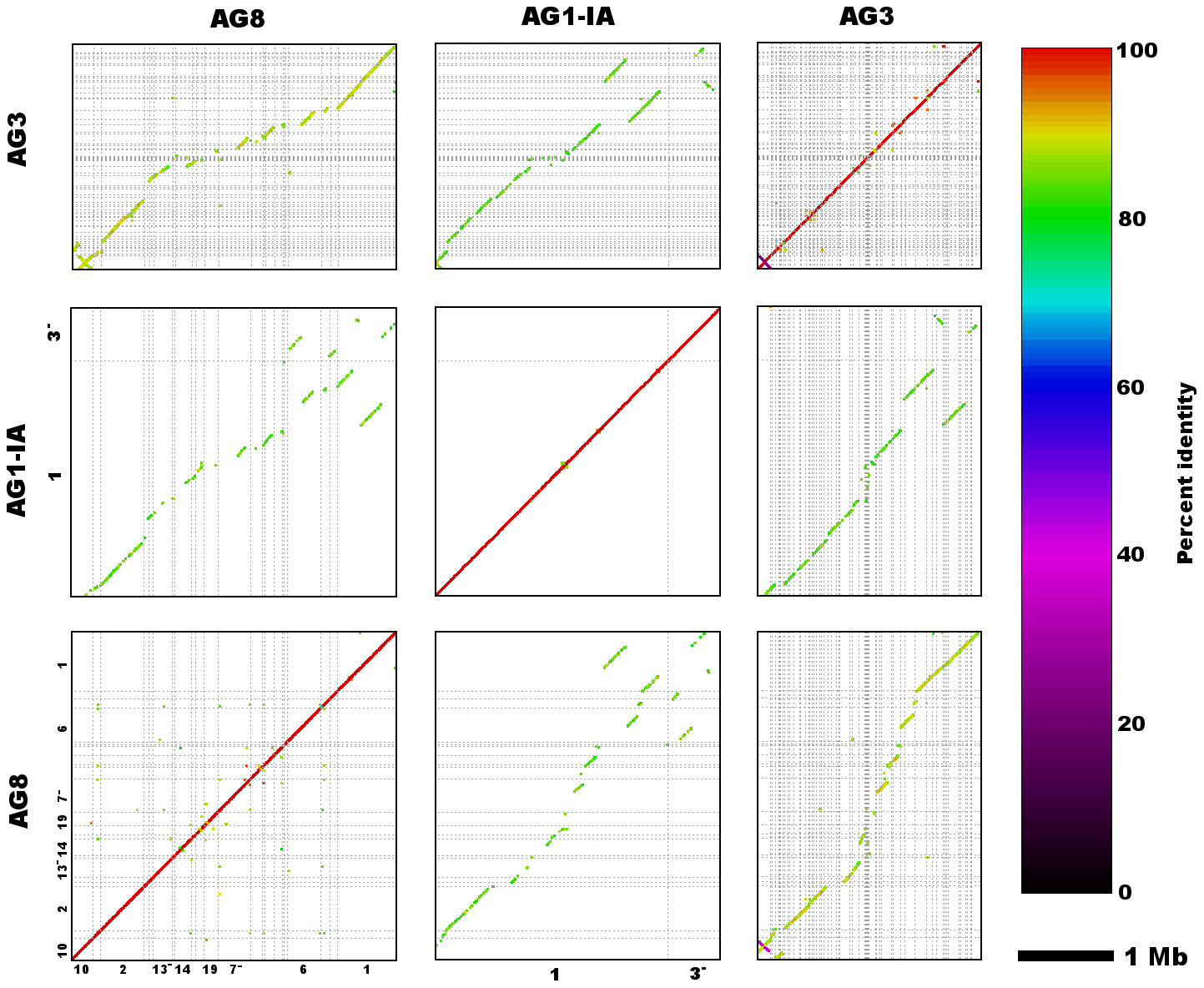 Genome assembly sequence comparisons between <i>R. solani</i> AG8 and isolates from alternate anastomosis groups.
