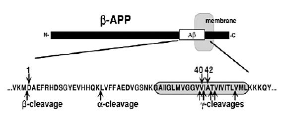 ß-amyloidný prekurzorový proteín (ß-APP)<sup>5)</sup>