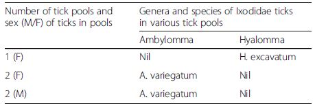 Genera and species of 5 positive adult tick pools from which CCHFV was isolated