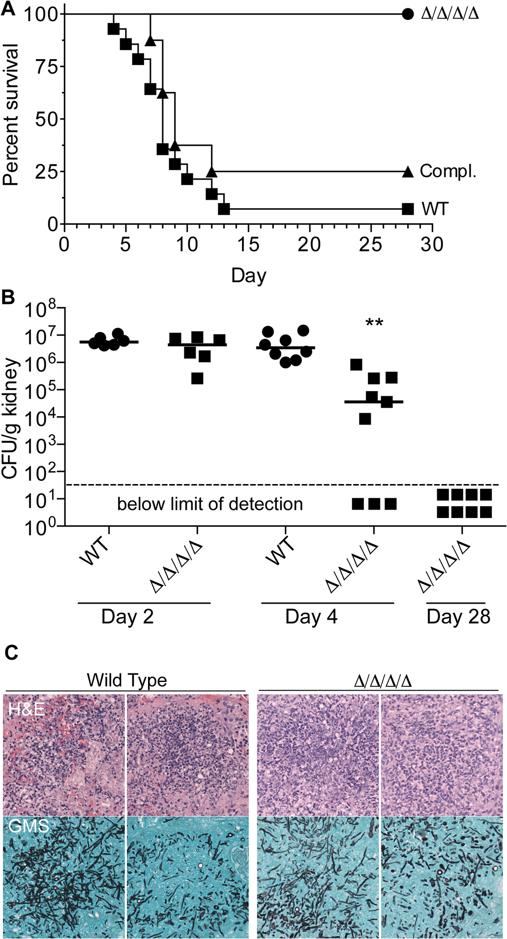 The Δ/Δ/Δ/Δ mutant is avirulent in a mouse model of systemic candidiasis.