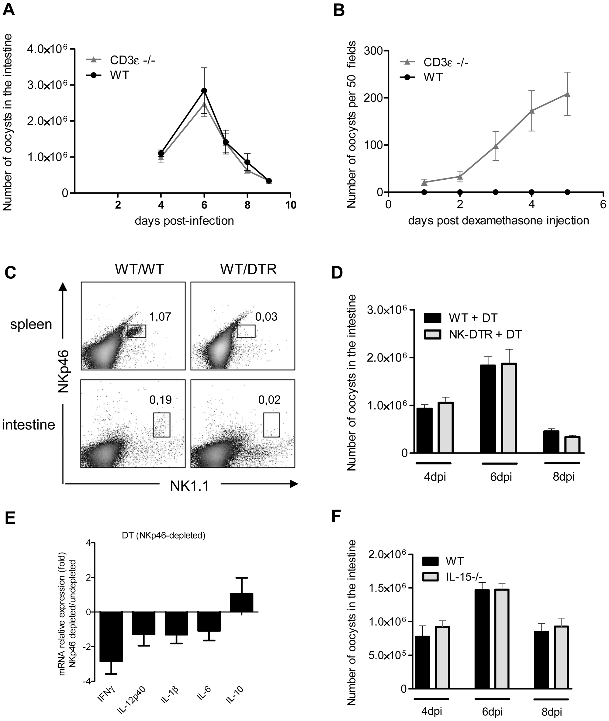 NKp46+NK1.1+ Natural killer cells and conventional T cells are not essential for the control of the acute phase of <i>C. parvum</i> infection.