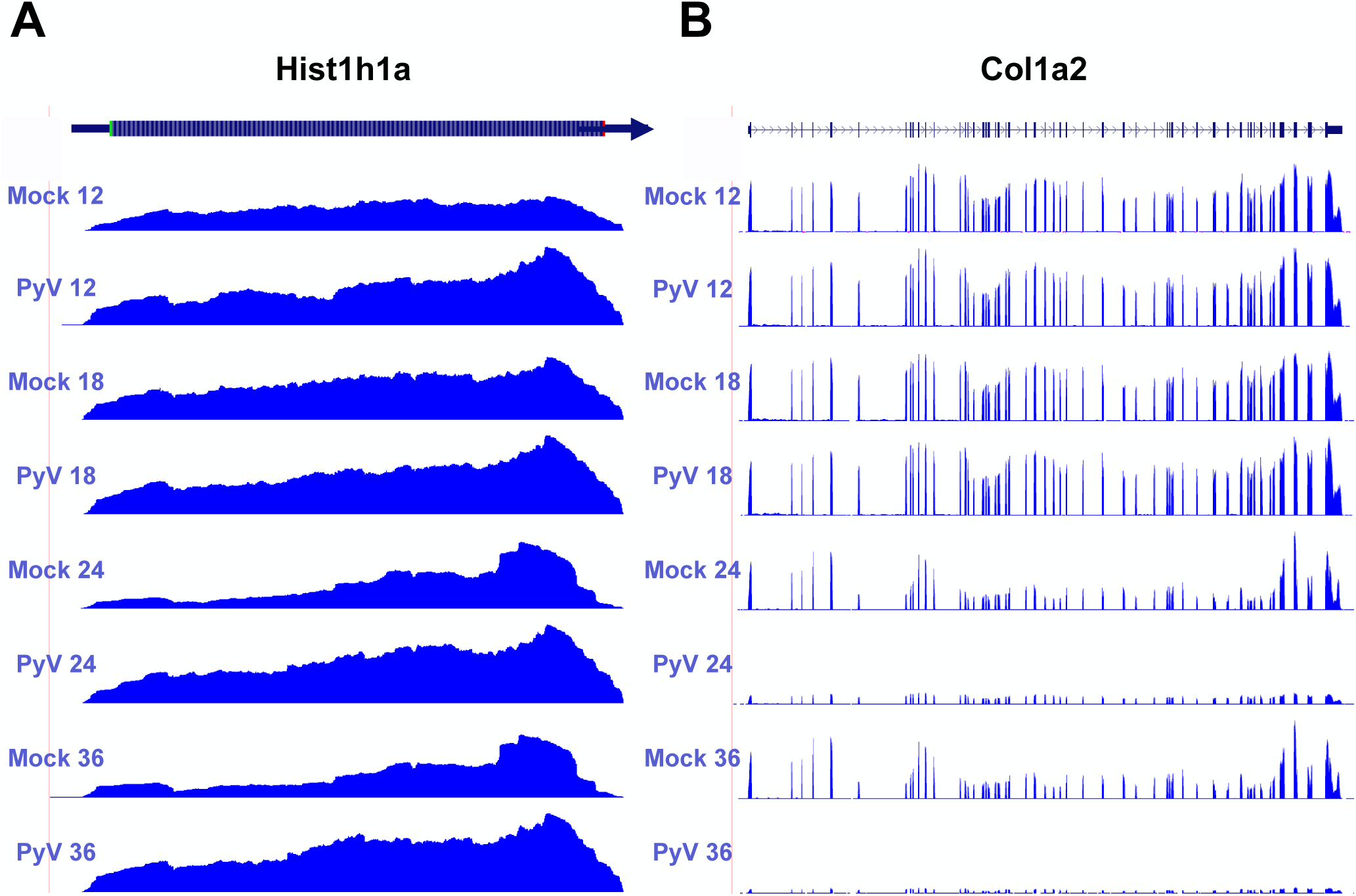 Example of host protein coding transcripts significantly upregulated or downregulated in infected samples compared to mock infection.
